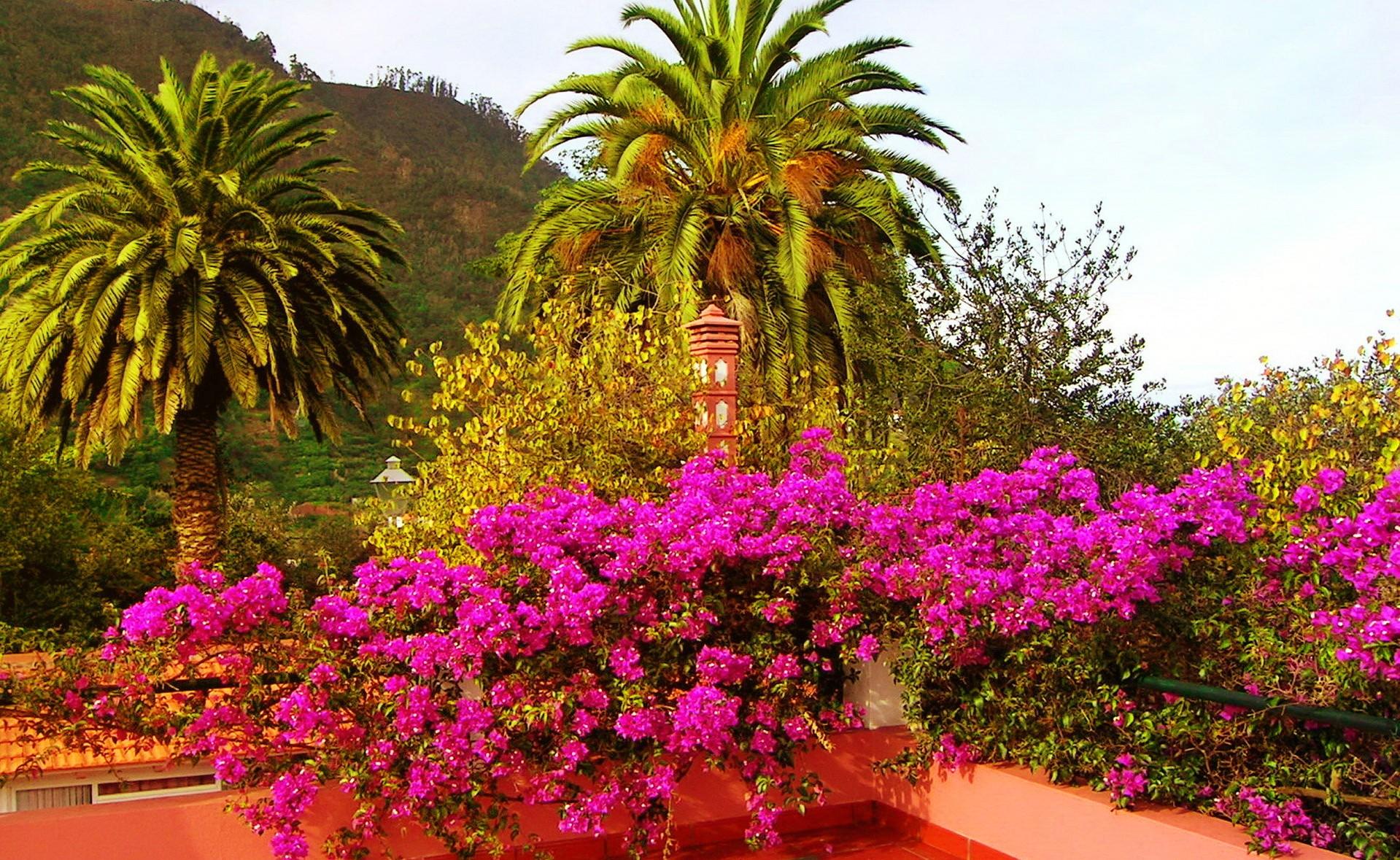 Other: Santa Cruz Madeira Exotin Flowers Sky Nice Summer Path Nature ...