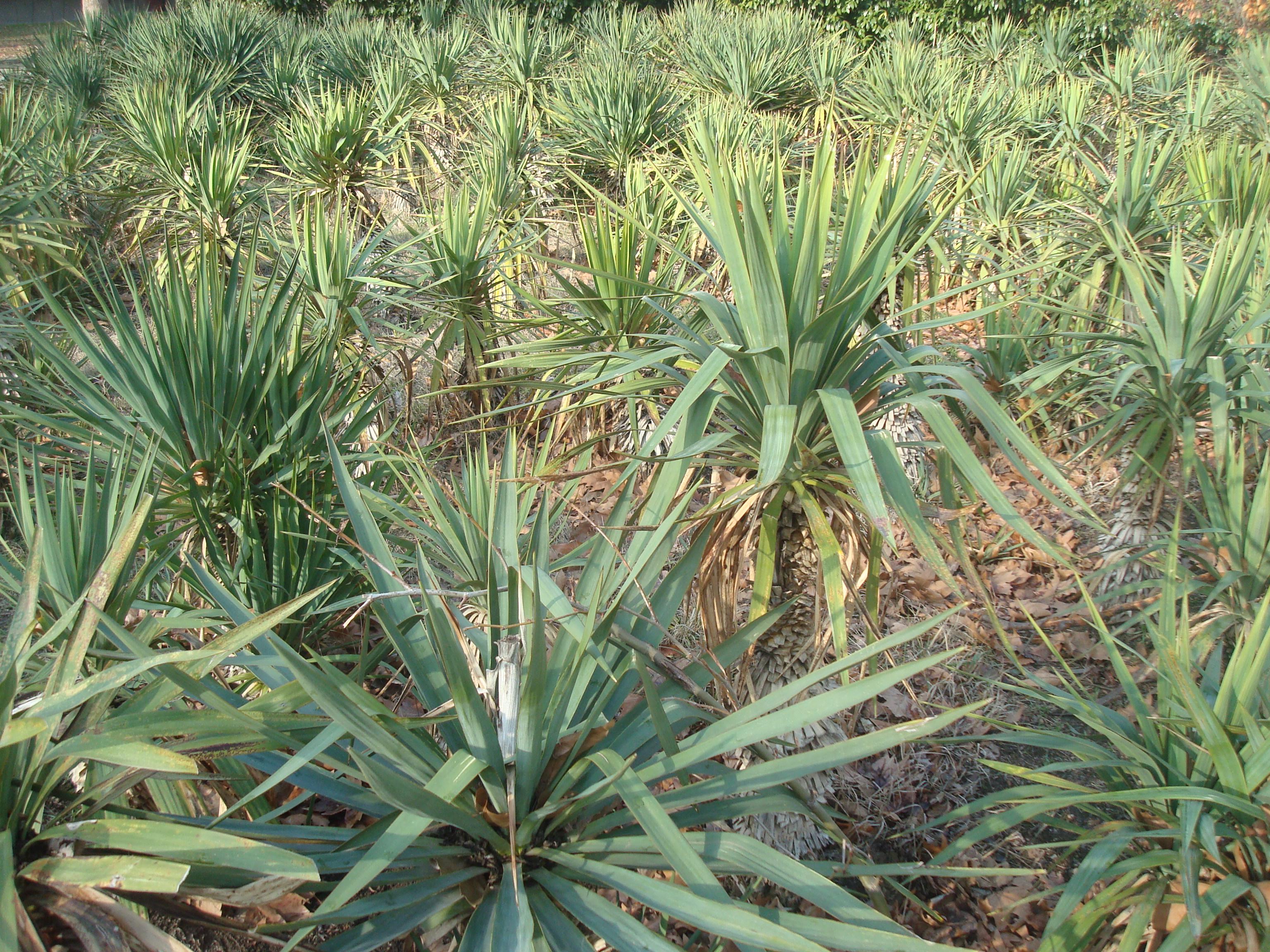 Palms garden, Palms, Park, Plants, Palm, HQ Photo