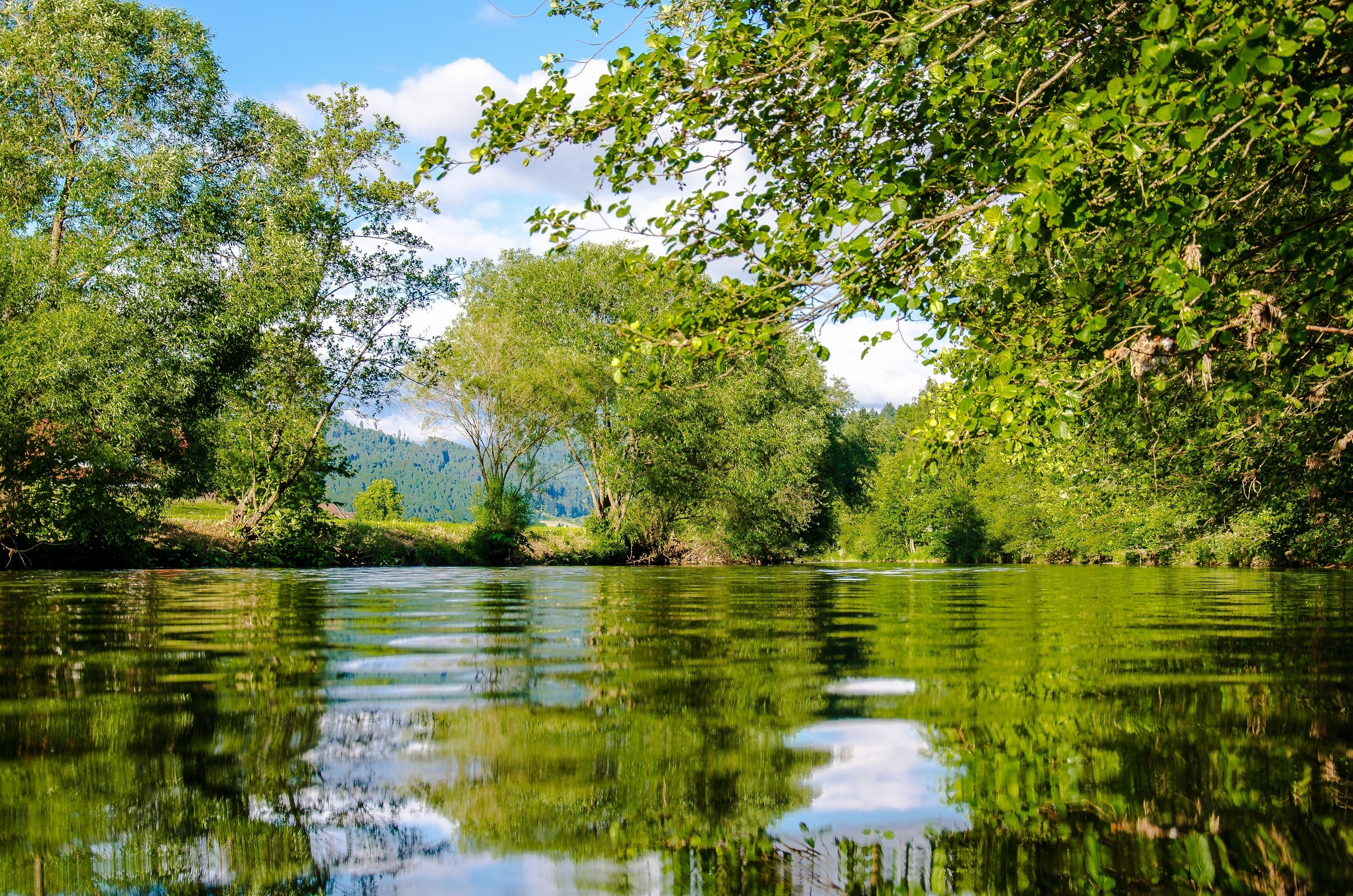 Panoramic Photo of Bushes Near Pond, Rural, River landscape, River, Scenic, HQ Photo