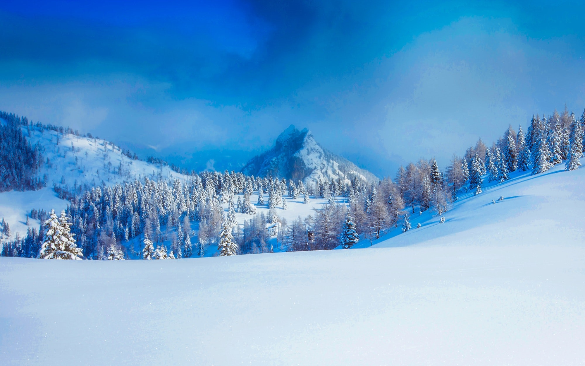Panoramic view of trees on snow covered landscape photo
