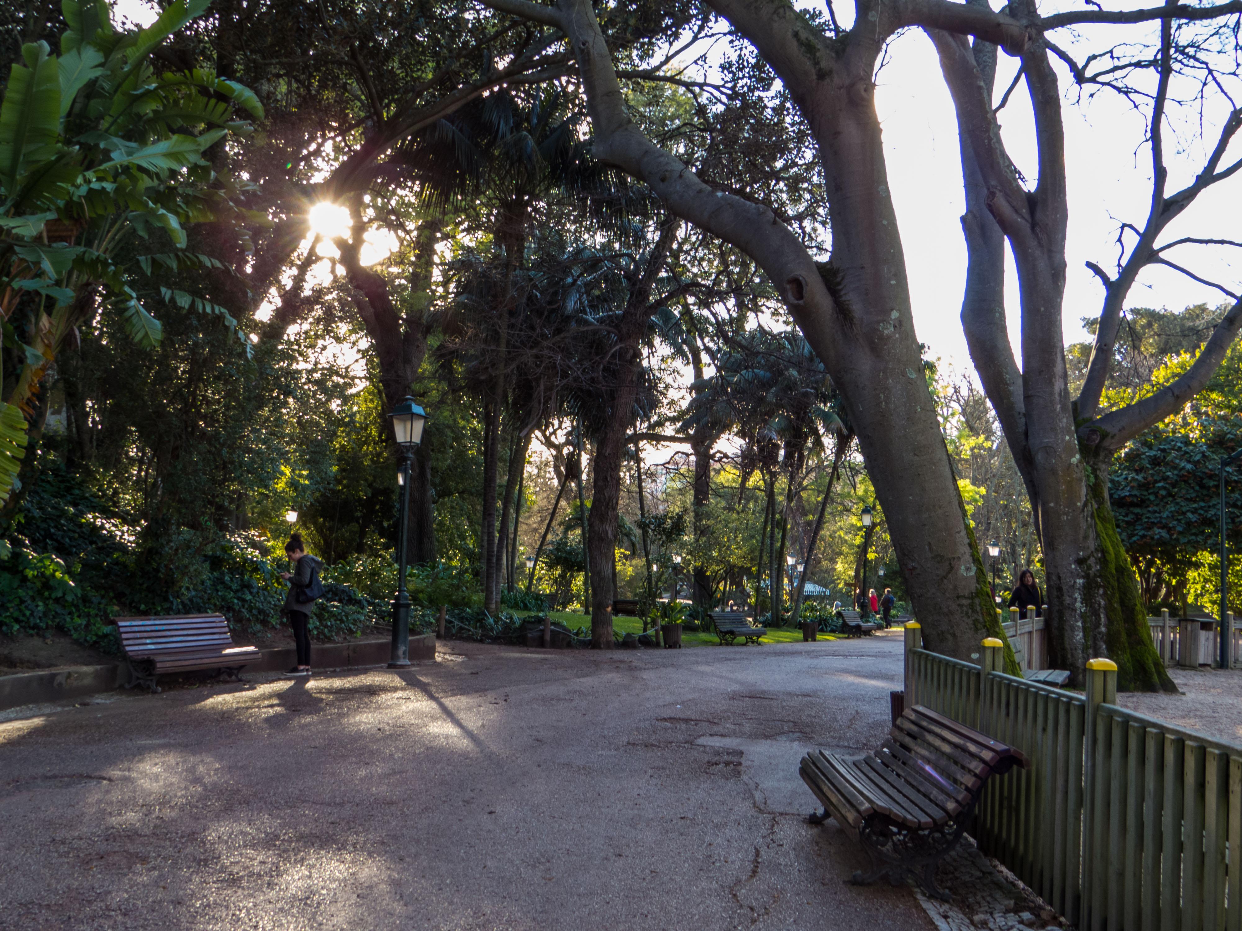 Park, Portugal, Road, Trees, Walk, HQ Photo