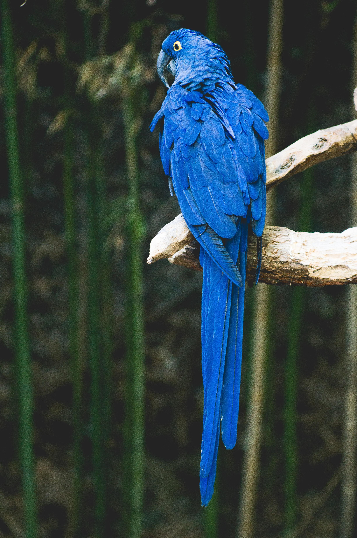 Parrot, Bird, Blue, Fly, Keep, HQ Photo
