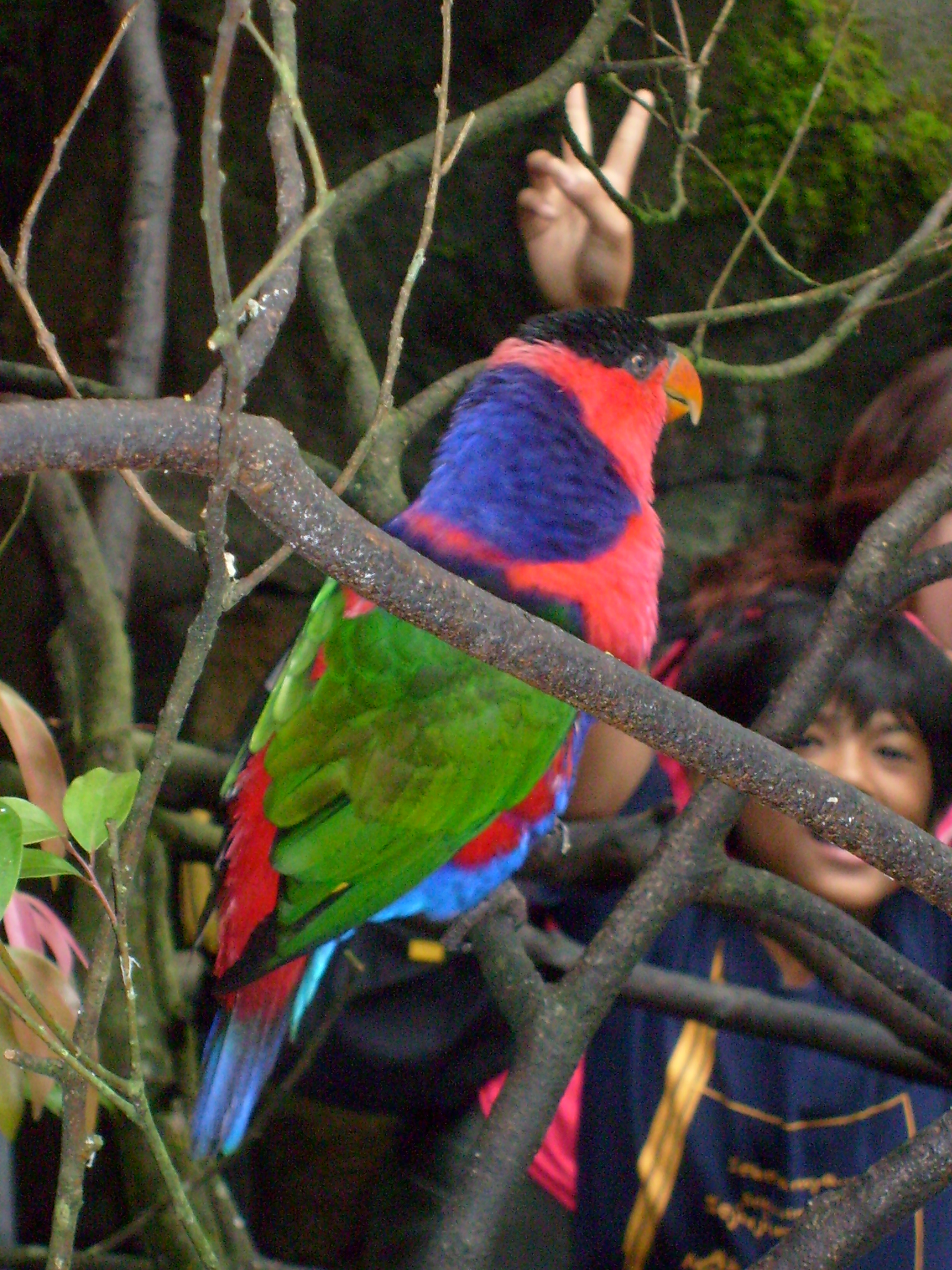 Parrot, Bird, Colored, Feathers, Tree, HQ Photo