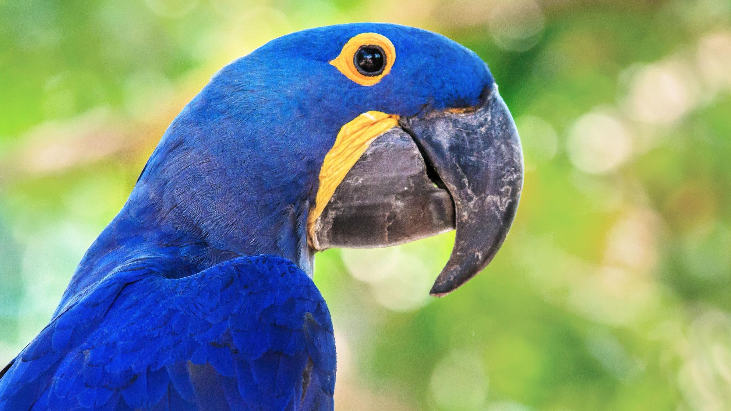 Parrots Among Most-Threatened Bird Groups | Audubon