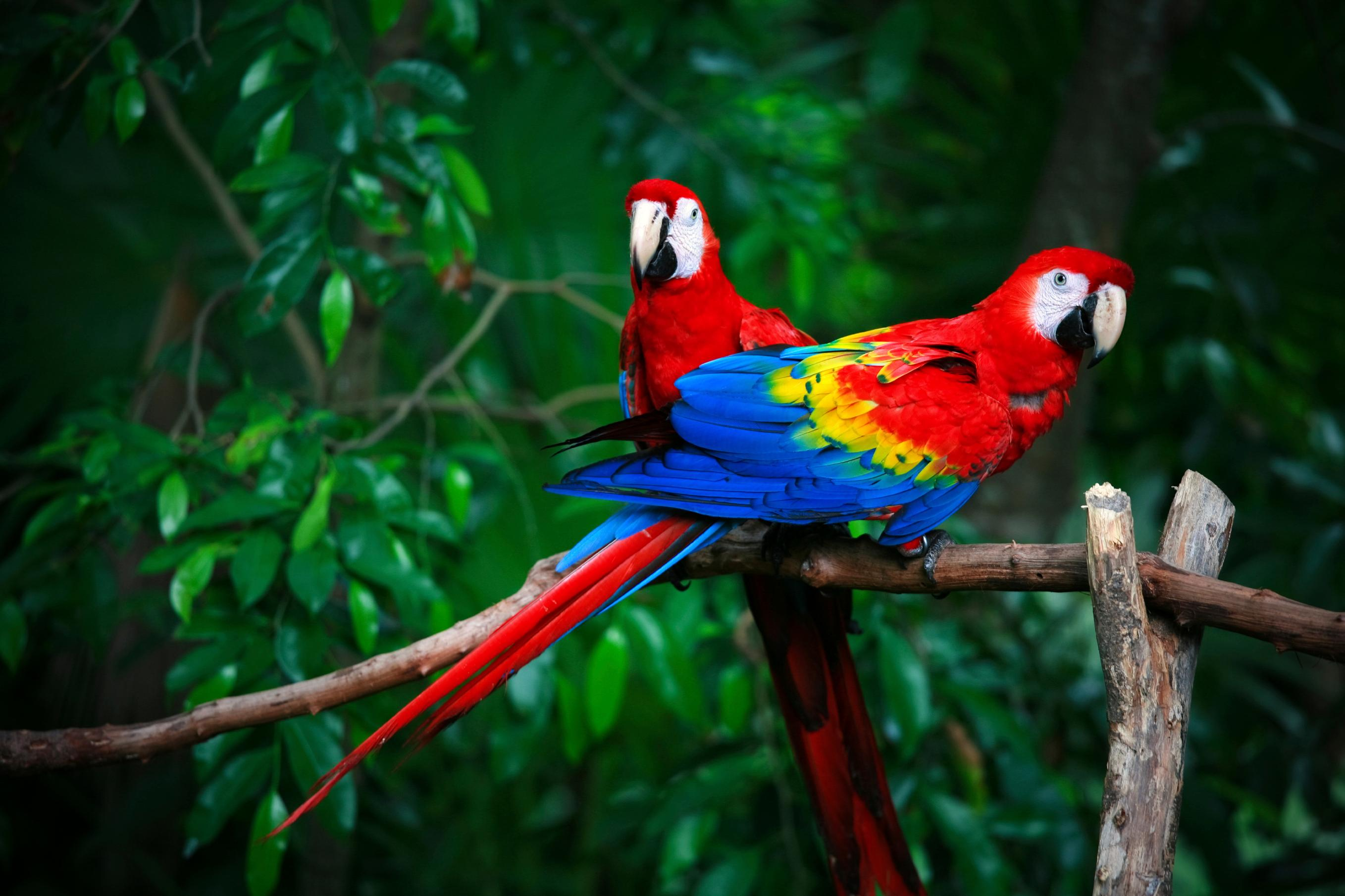 14 Fun Facts About Parrots | Science | Smithsonian