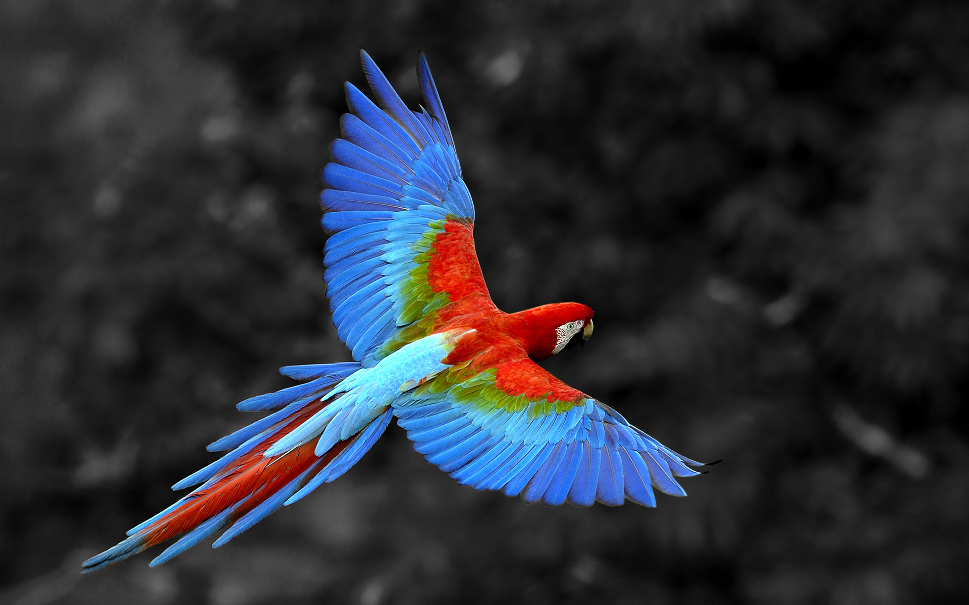 Parrot Symbolism; A message - Spirit Animal Totems