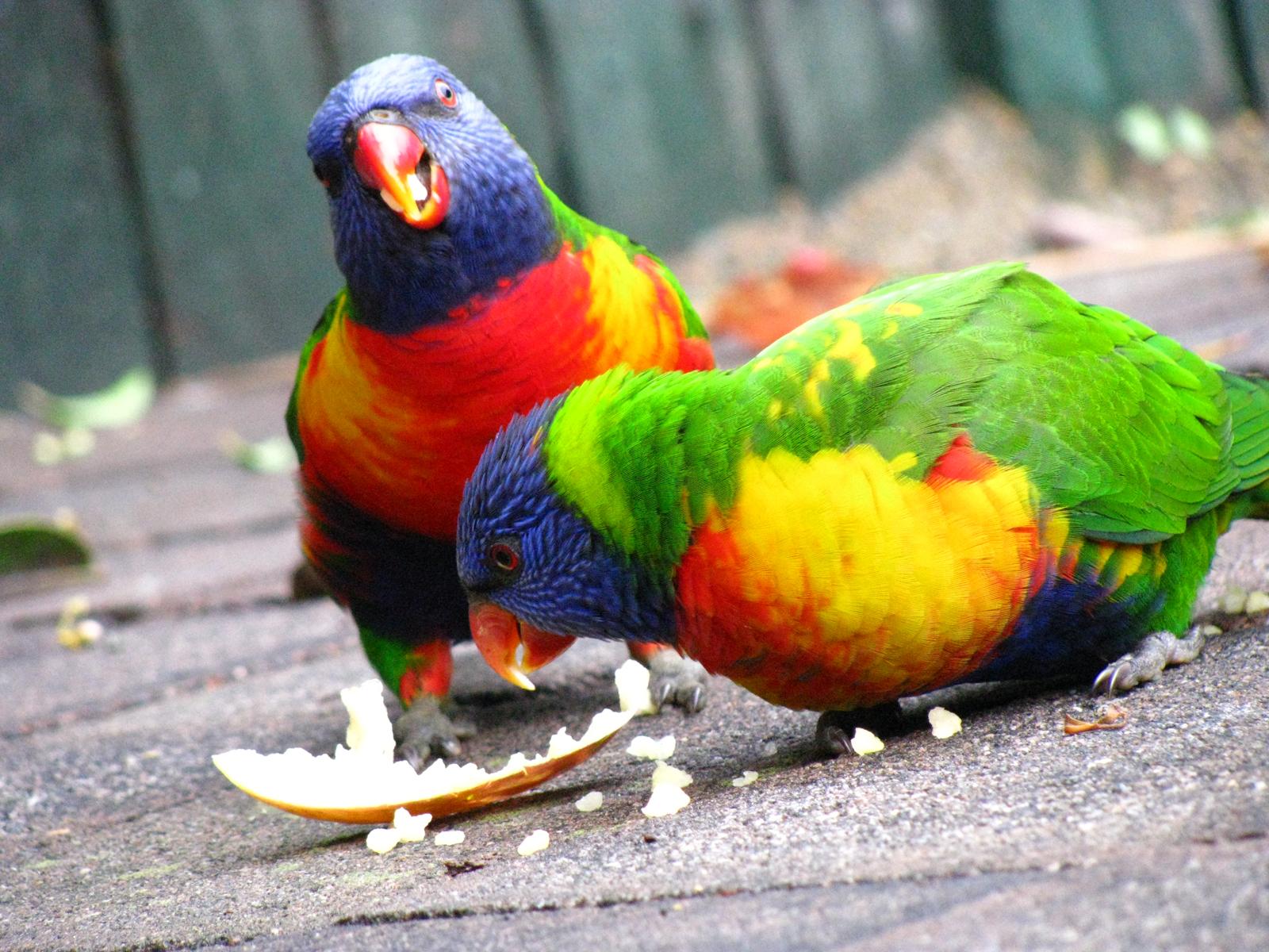 Parrots, Bird