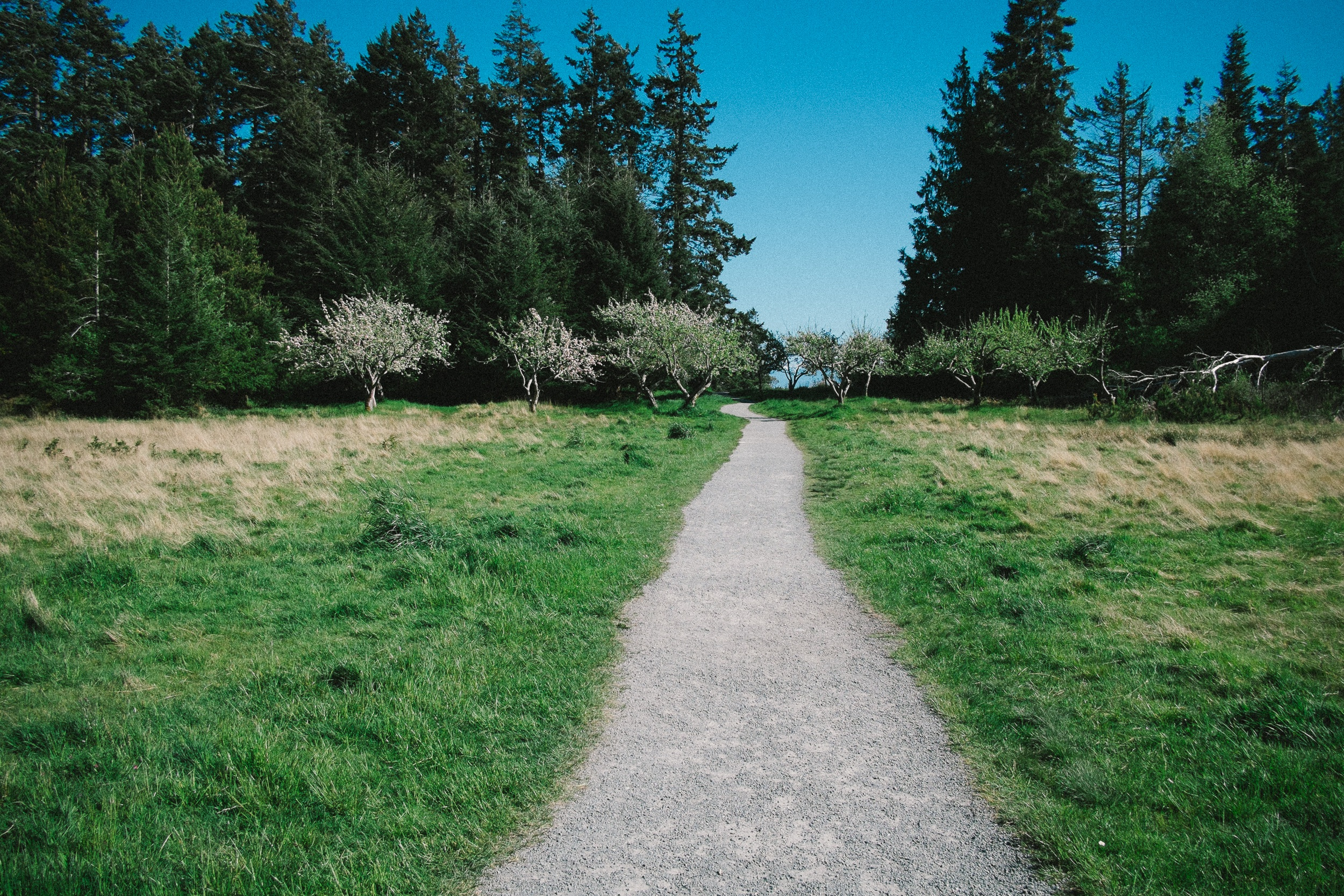 Path, Bunch, Green, Nature, Pathway, HQ Photo