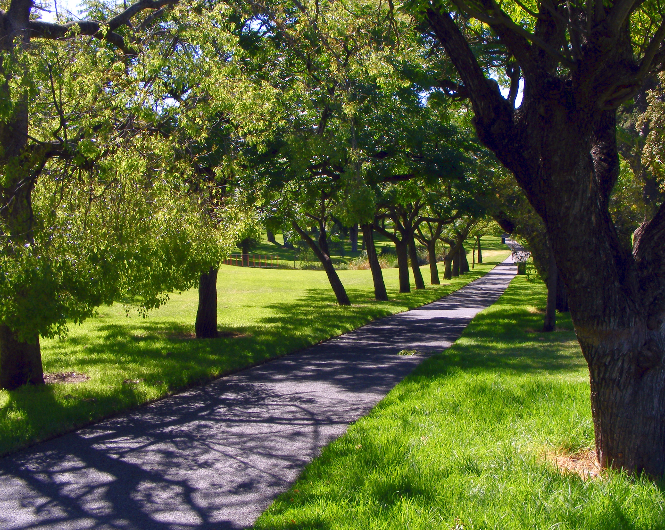 File:Rymill park path.jpg - Wikimedia Commons