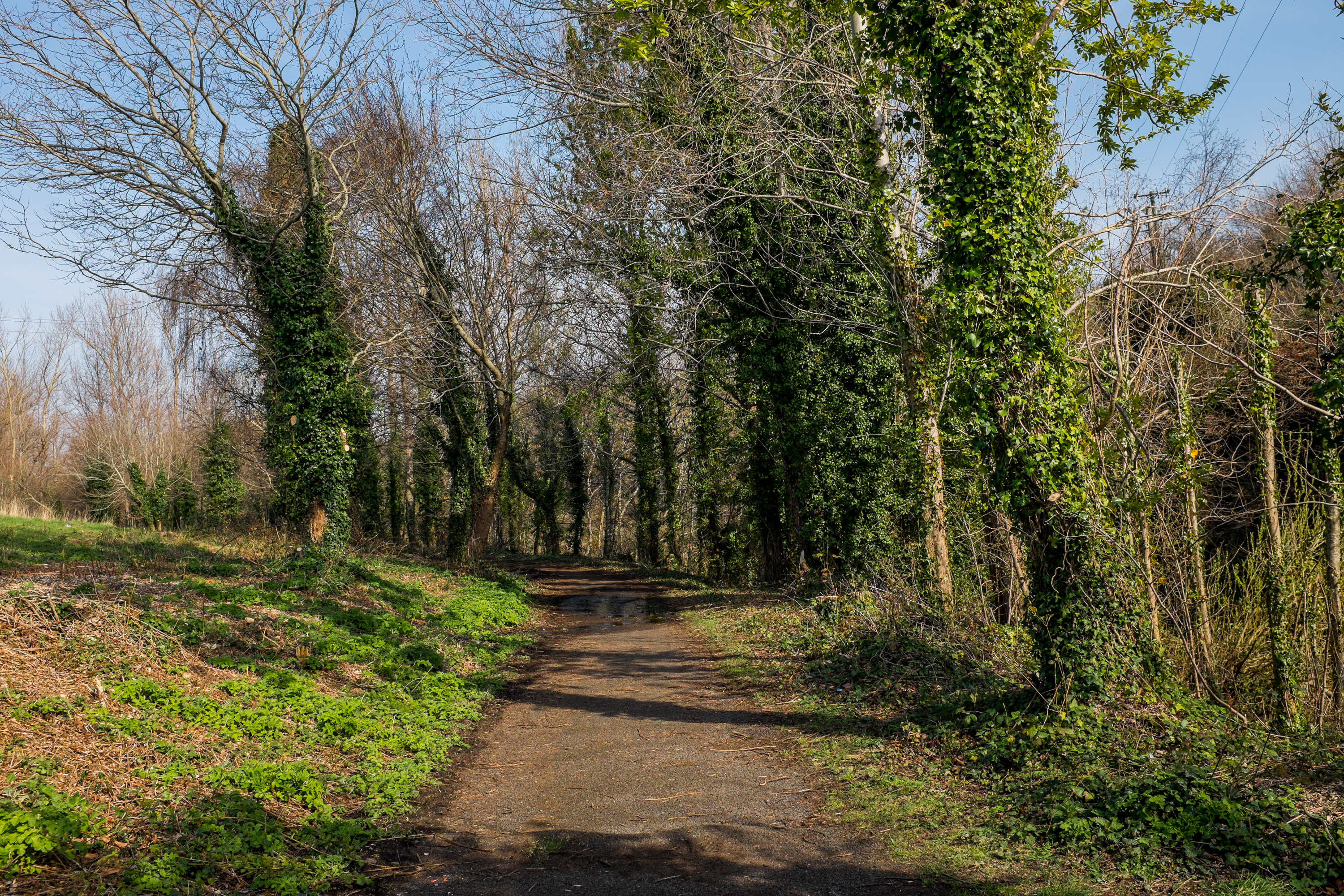 Forest Path in Spring - Picography Free Photo