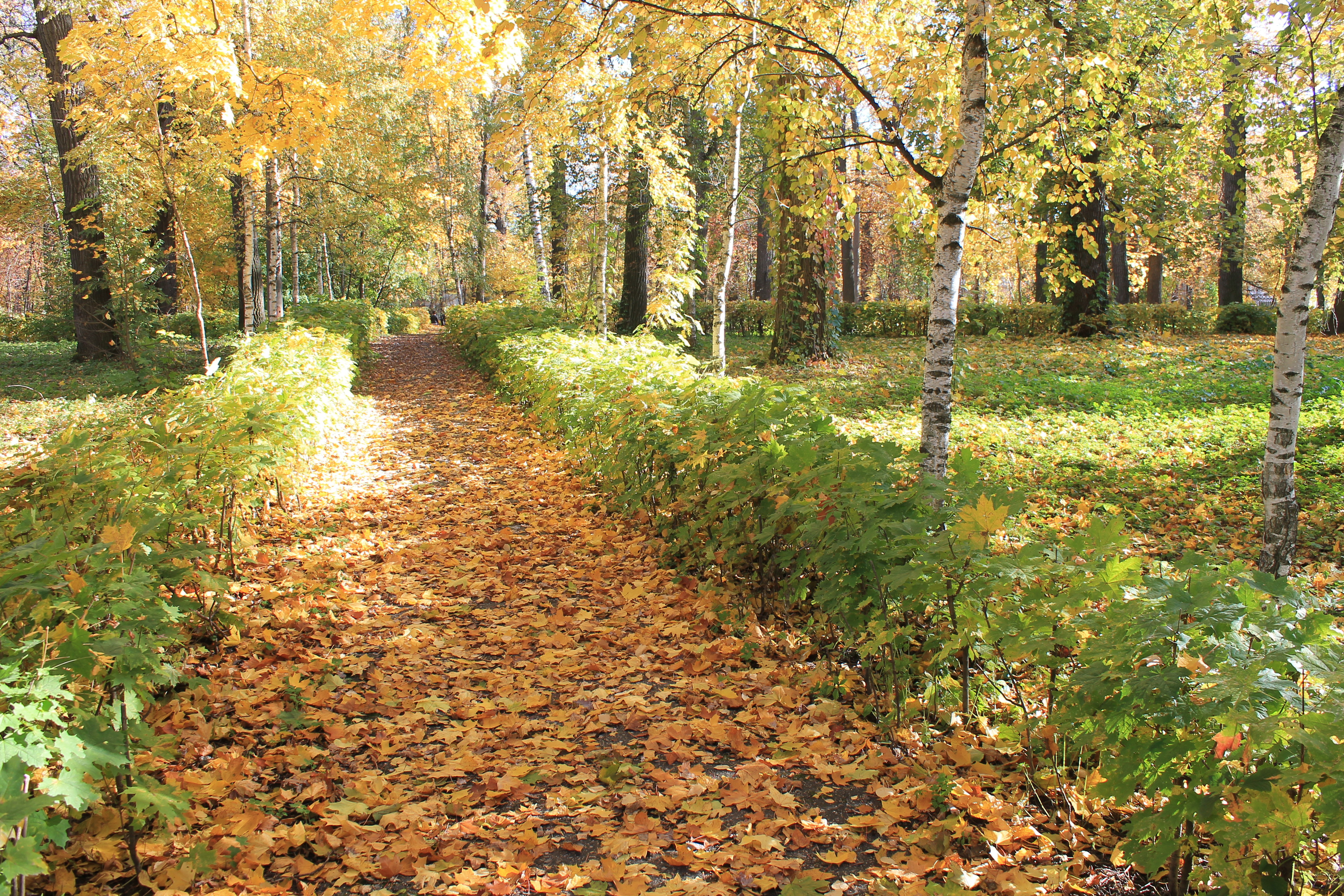 Path in the woods at autumn photo