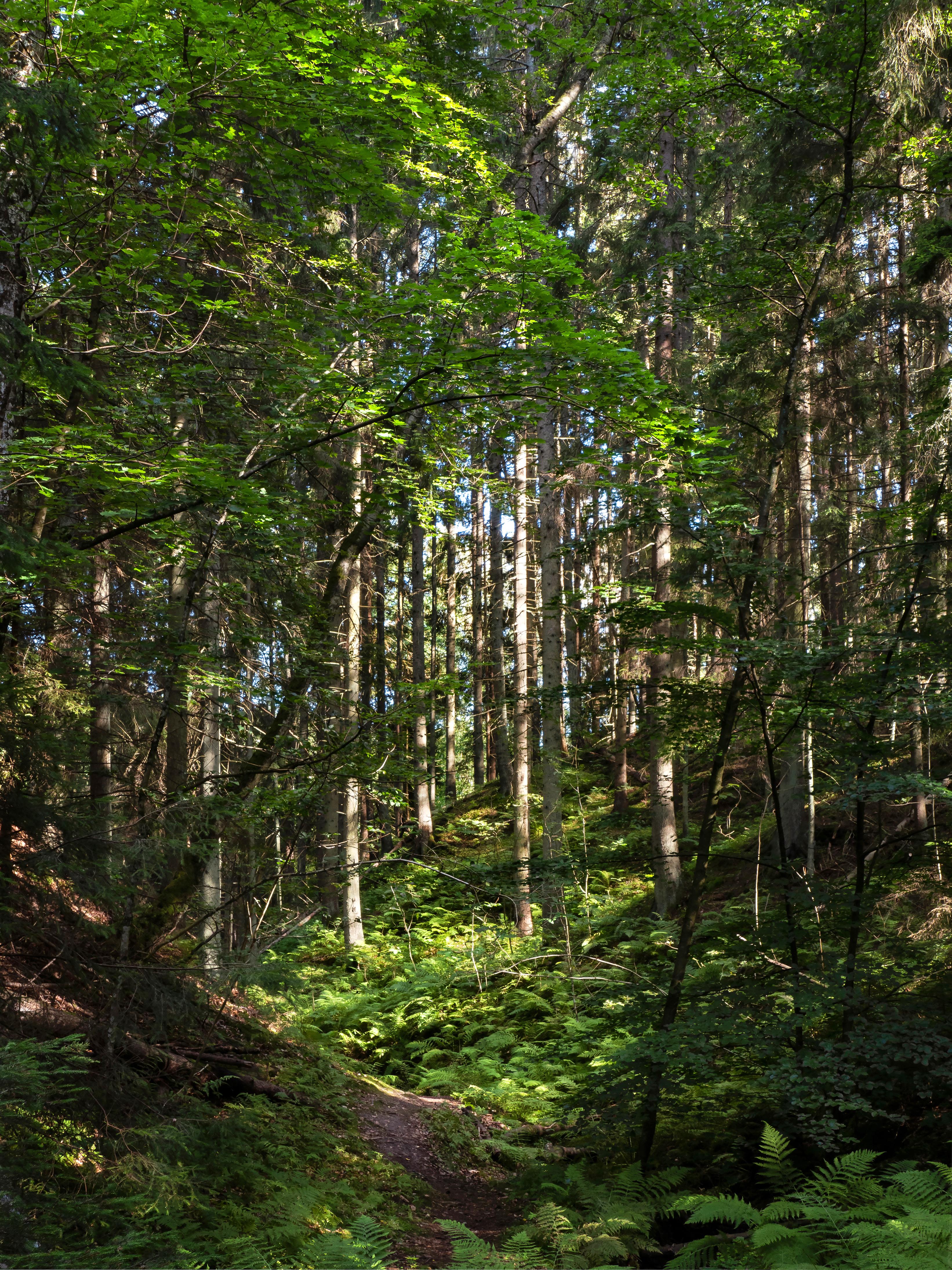 Path to a sunny patch in gullmarsskogen ravine 3 photo