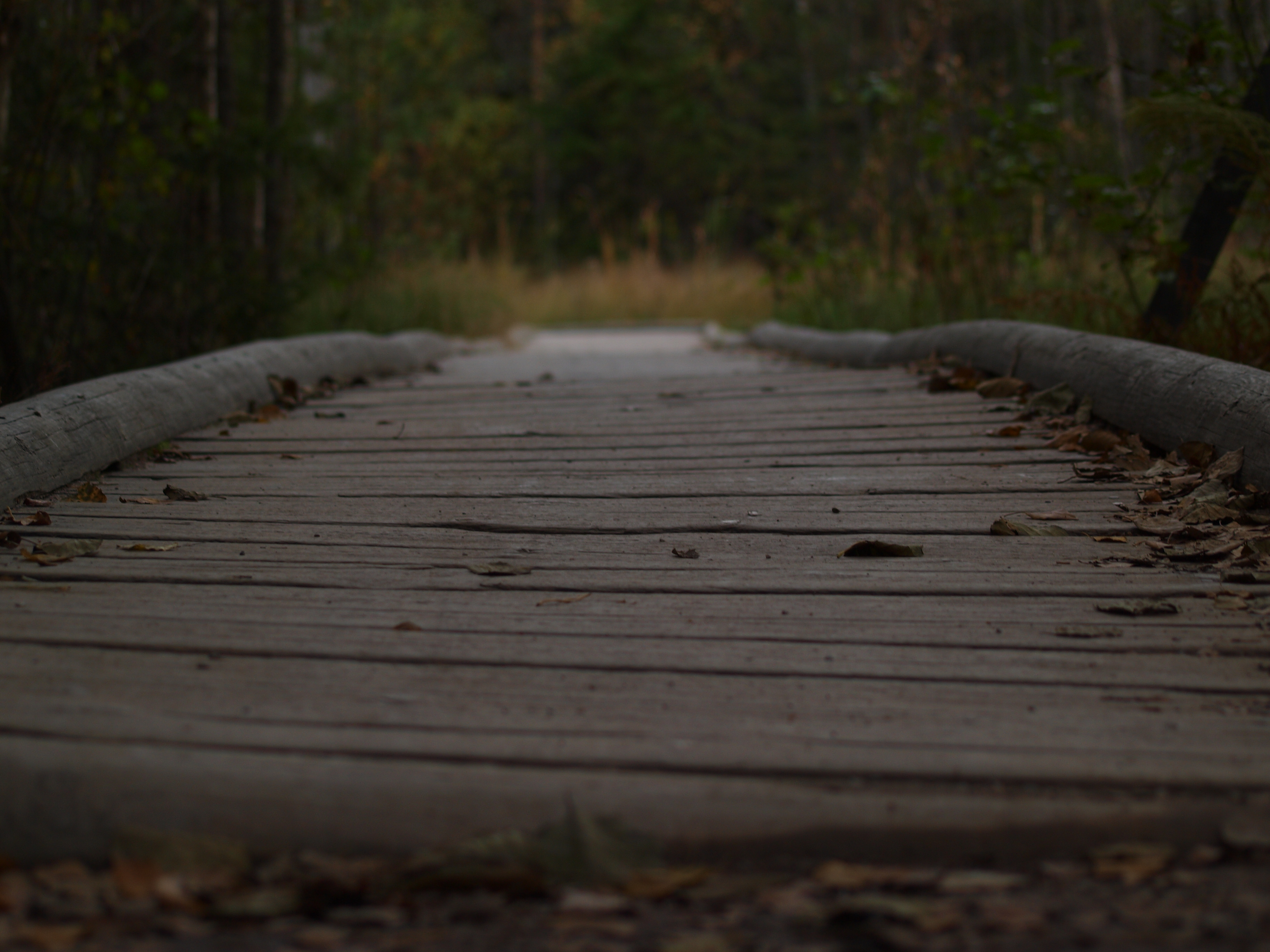 Path with wooden bridge, Bridge, Nature, Over, Path, HQ Photo