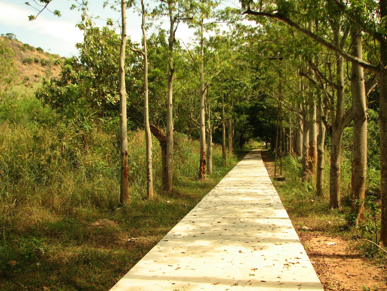 Pathway photo