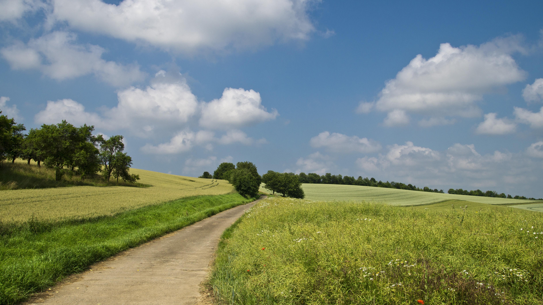 Pathway in between of green grass field photo
