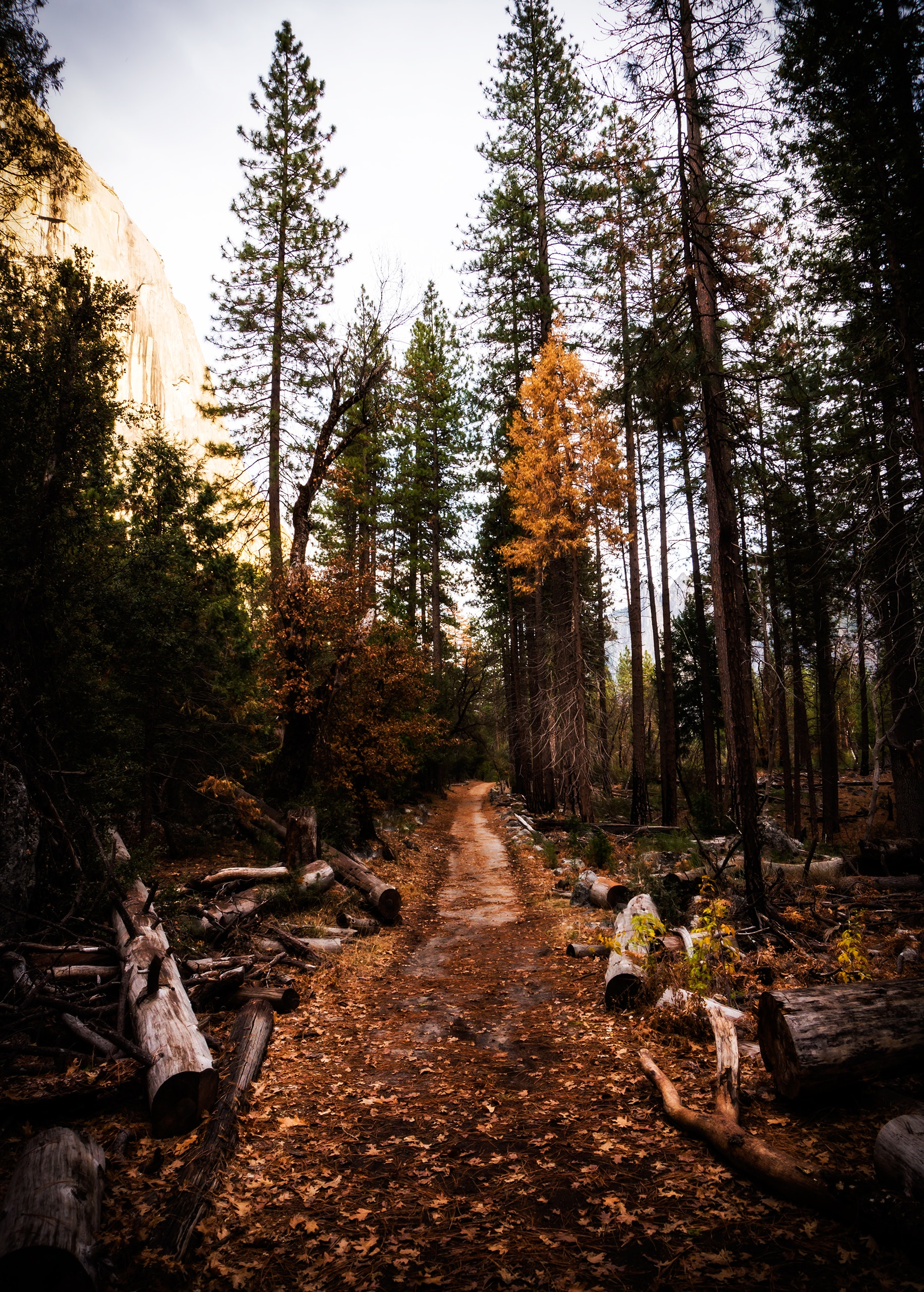 Pathway Surrounded by Logs, Conifer, Park, Wood, Unpaved pathway, HQ Photo