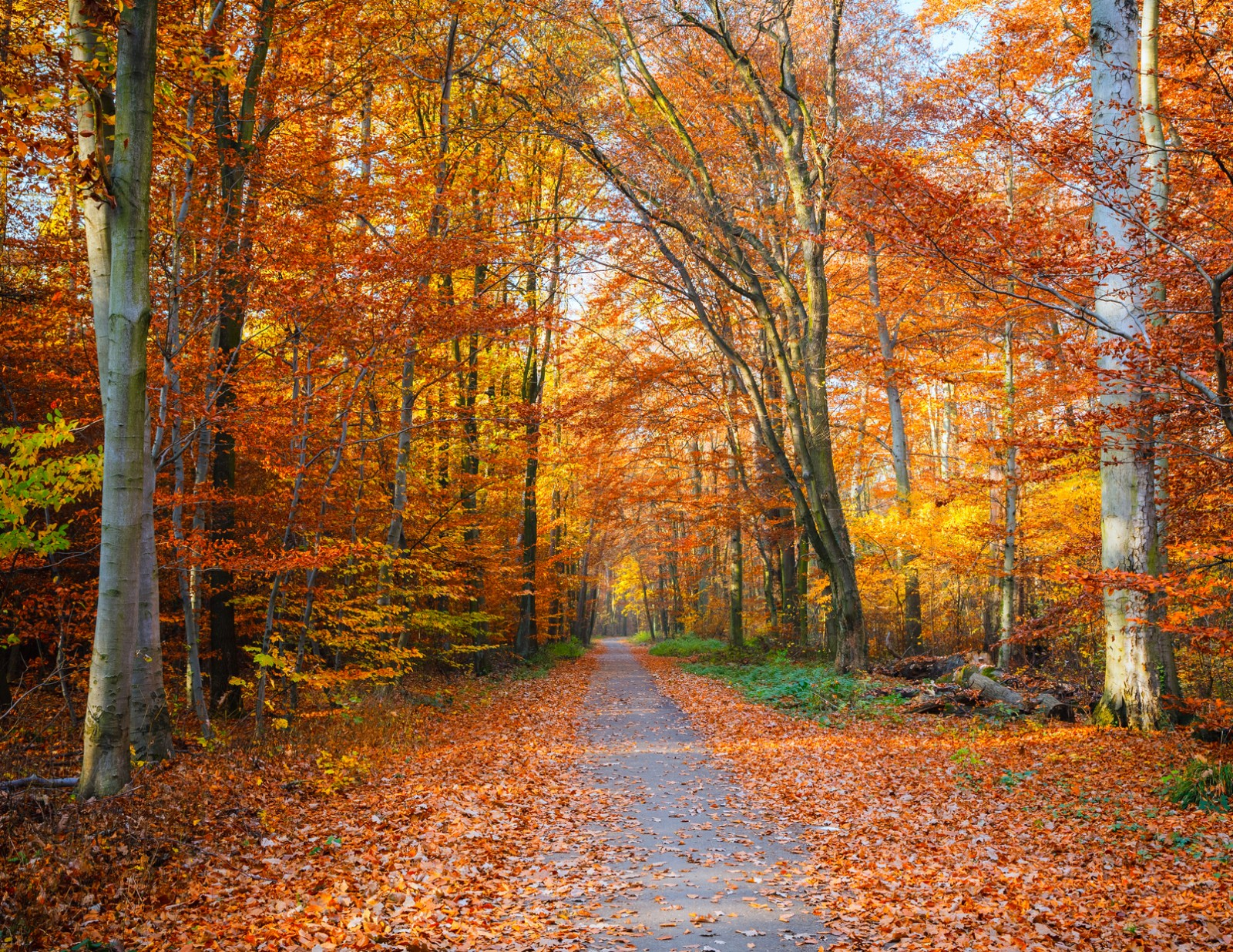 Pathway to fall photo