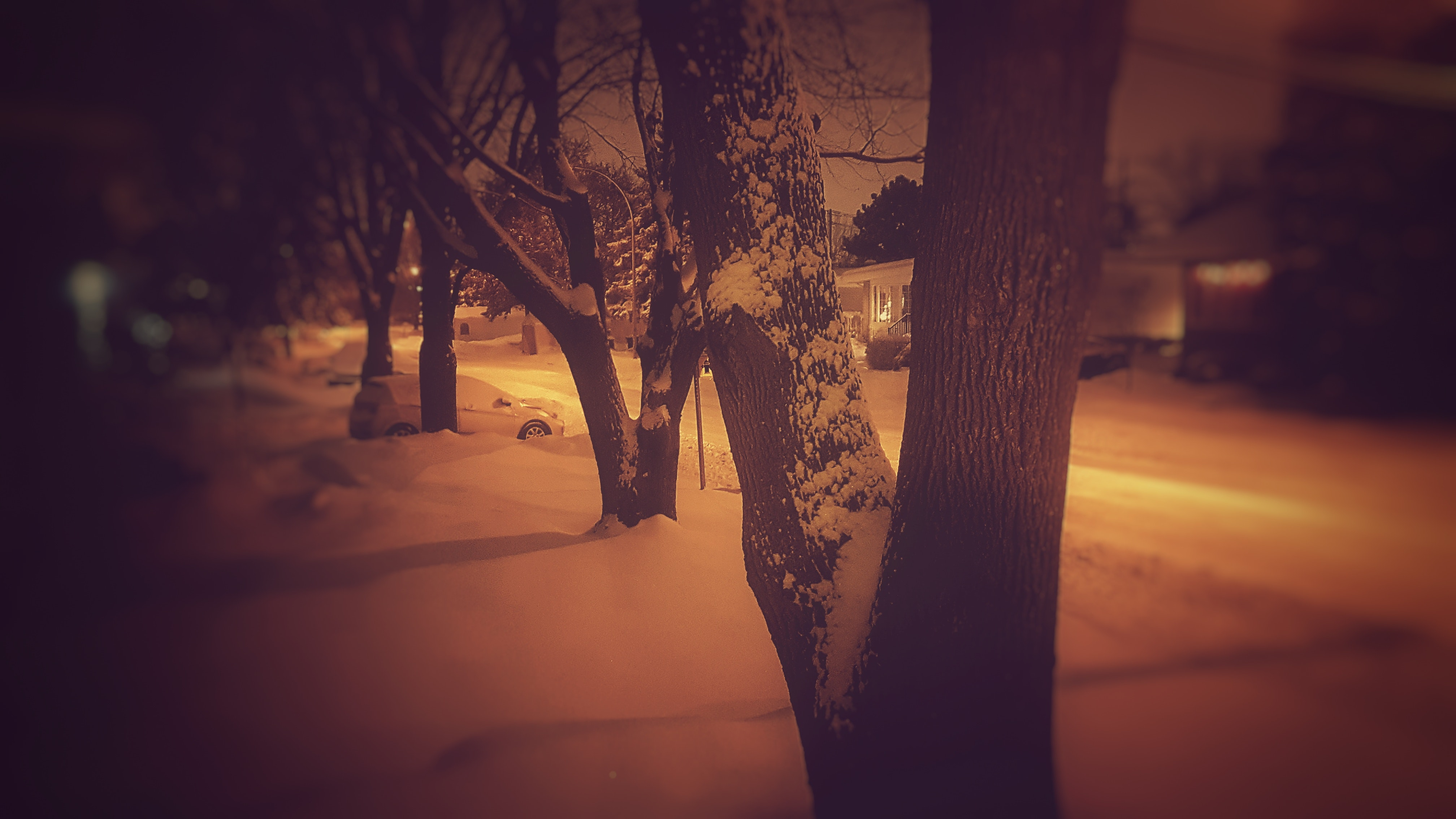 Pavement Covered With Snow Beside Road, Backlit, Night, Winter, Weather, HQ Photo