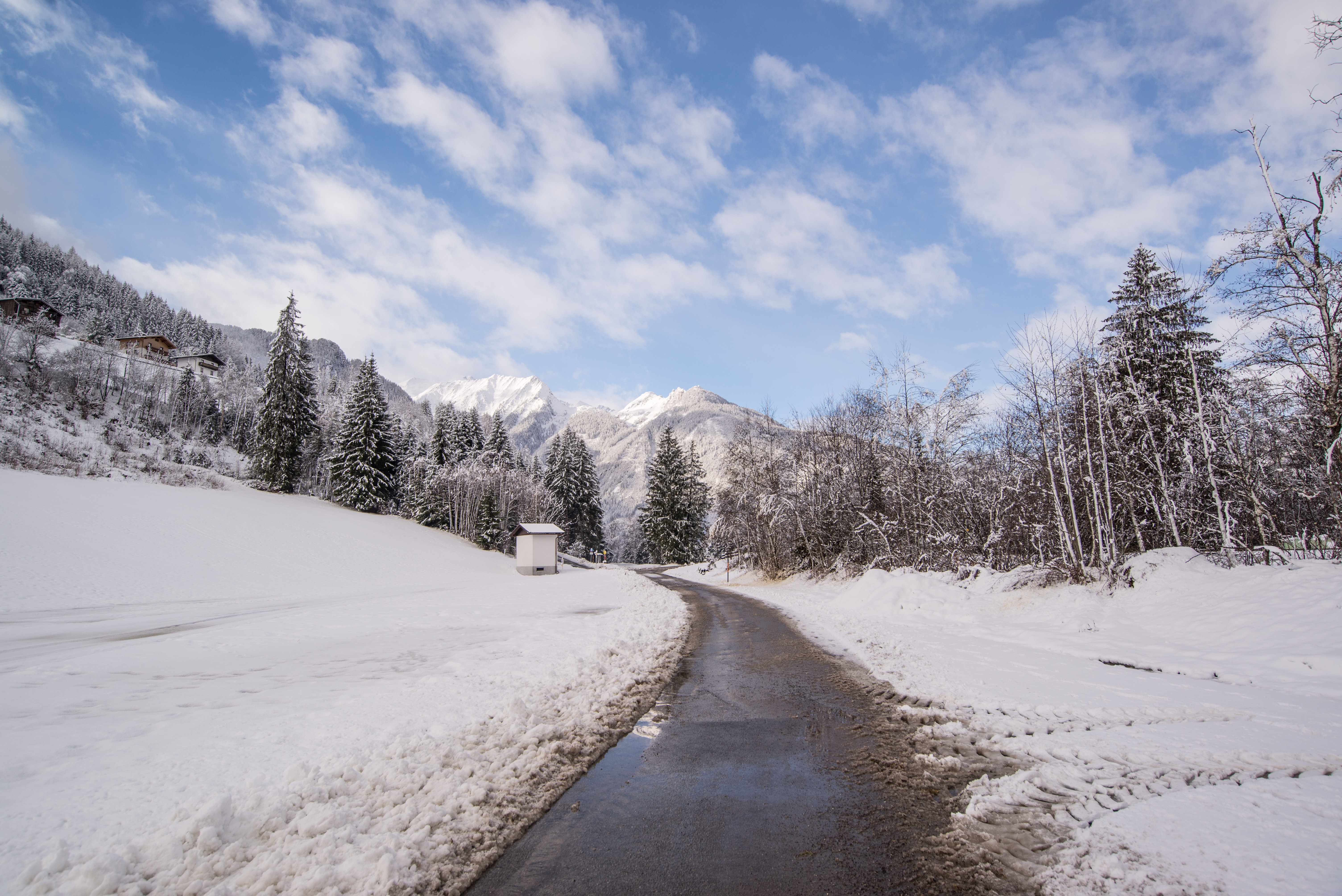 Pavement road surrounded by snow and pine trees photo