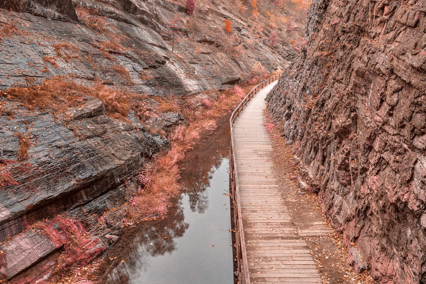 Paw paw boardwalk trail - pastel fantasy hdr photo
