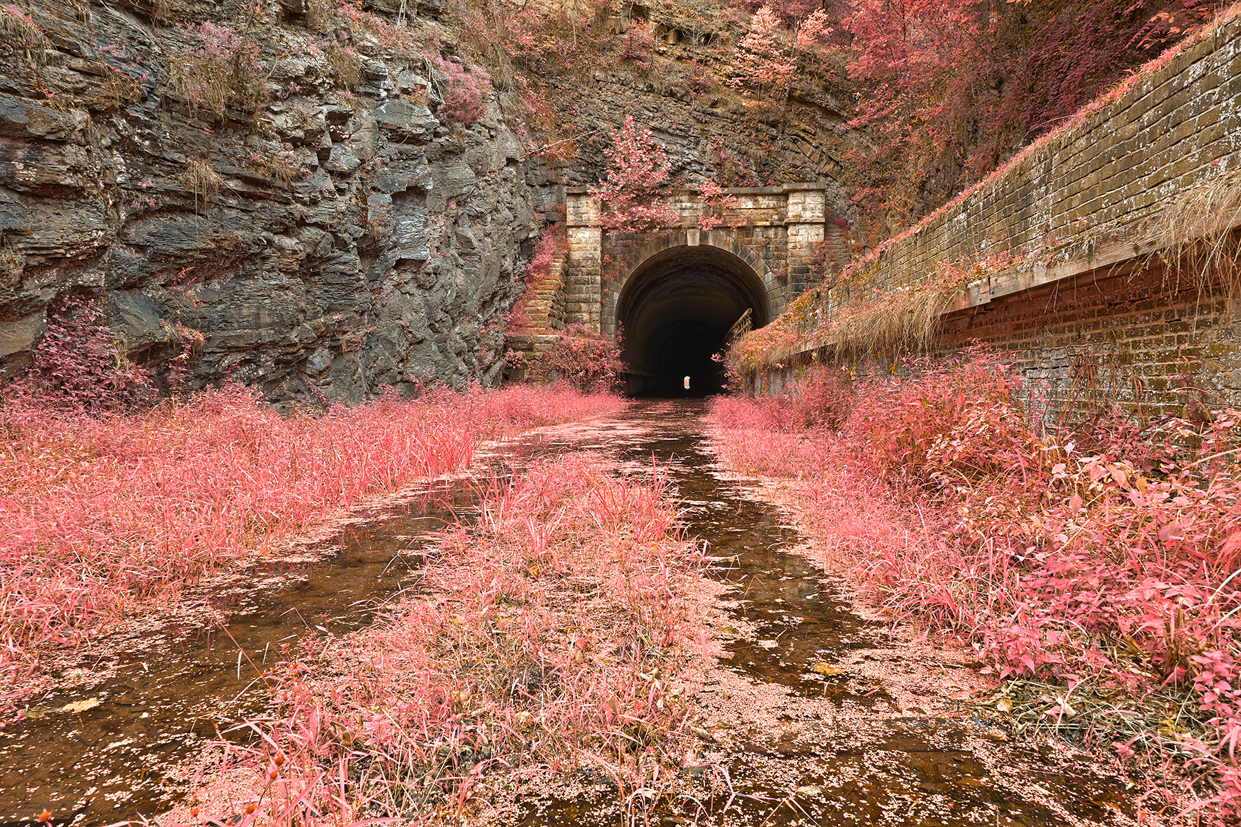 Paw paw tunnel - pink netherworld hdr photo