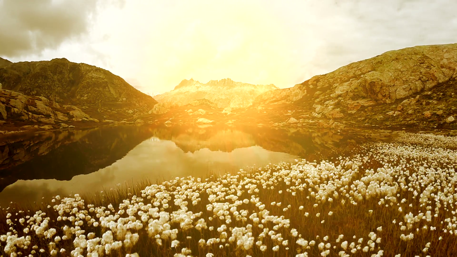 cotton field around mountain lake landscape scenery. peaceful nature ...