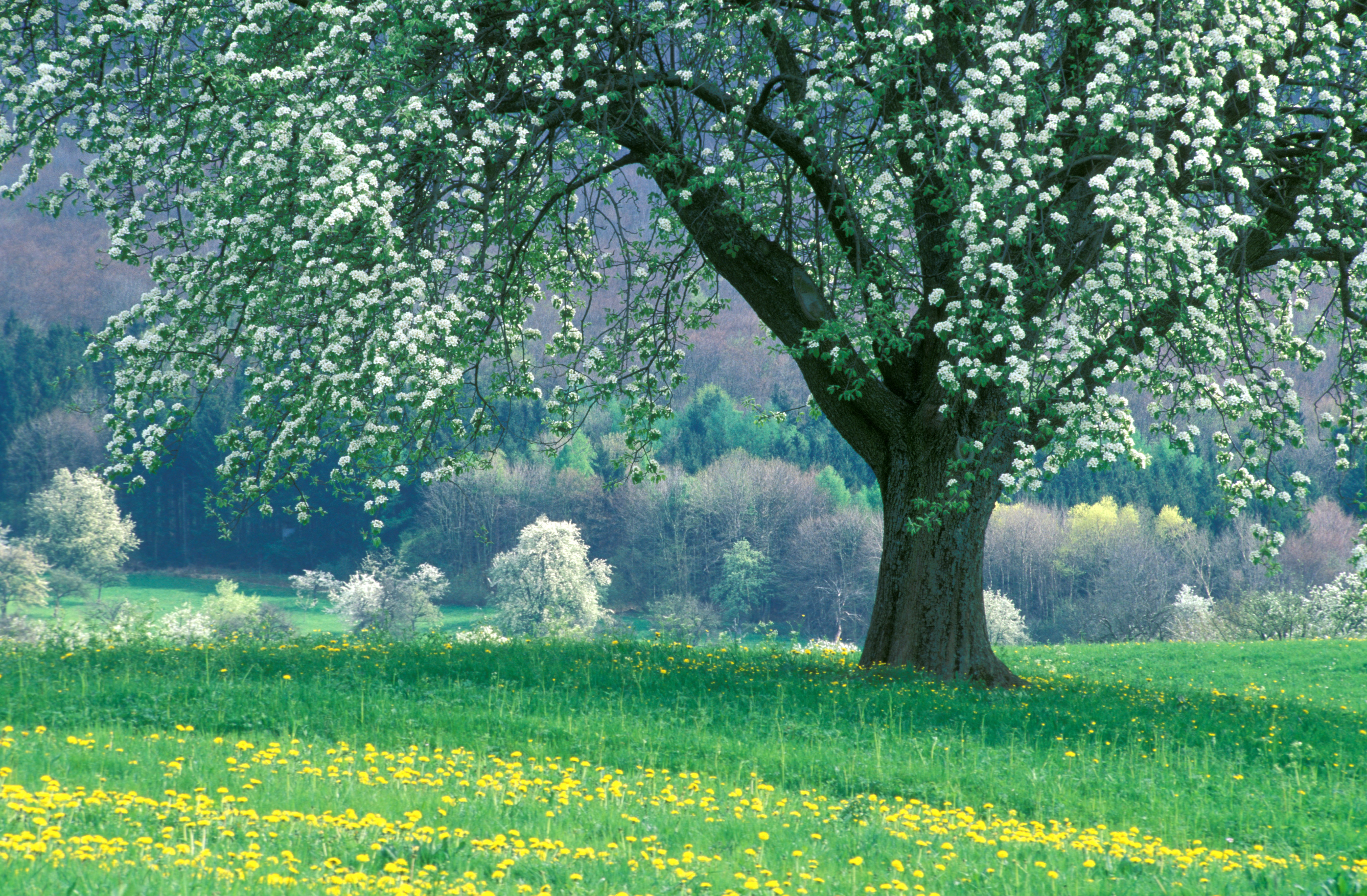 Flowers: Peaceful Spring Grass Flowers Blossoms Freshness Nature ...