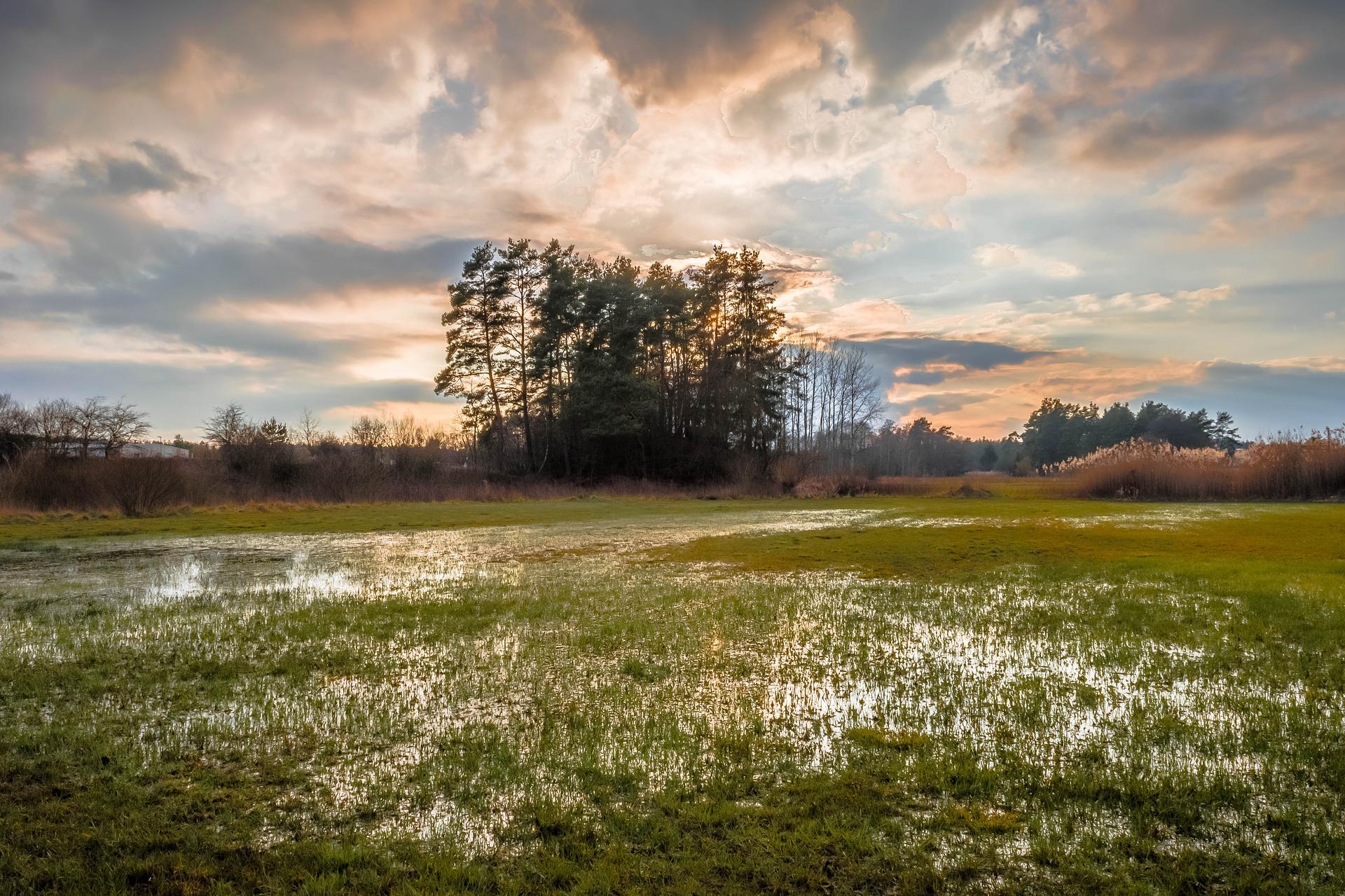 Peaceful Nature, Peace, Nature, Field, Eve, HQ Photo