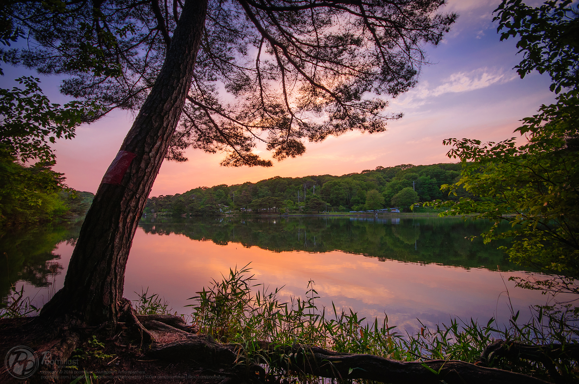Peaceful pond photo