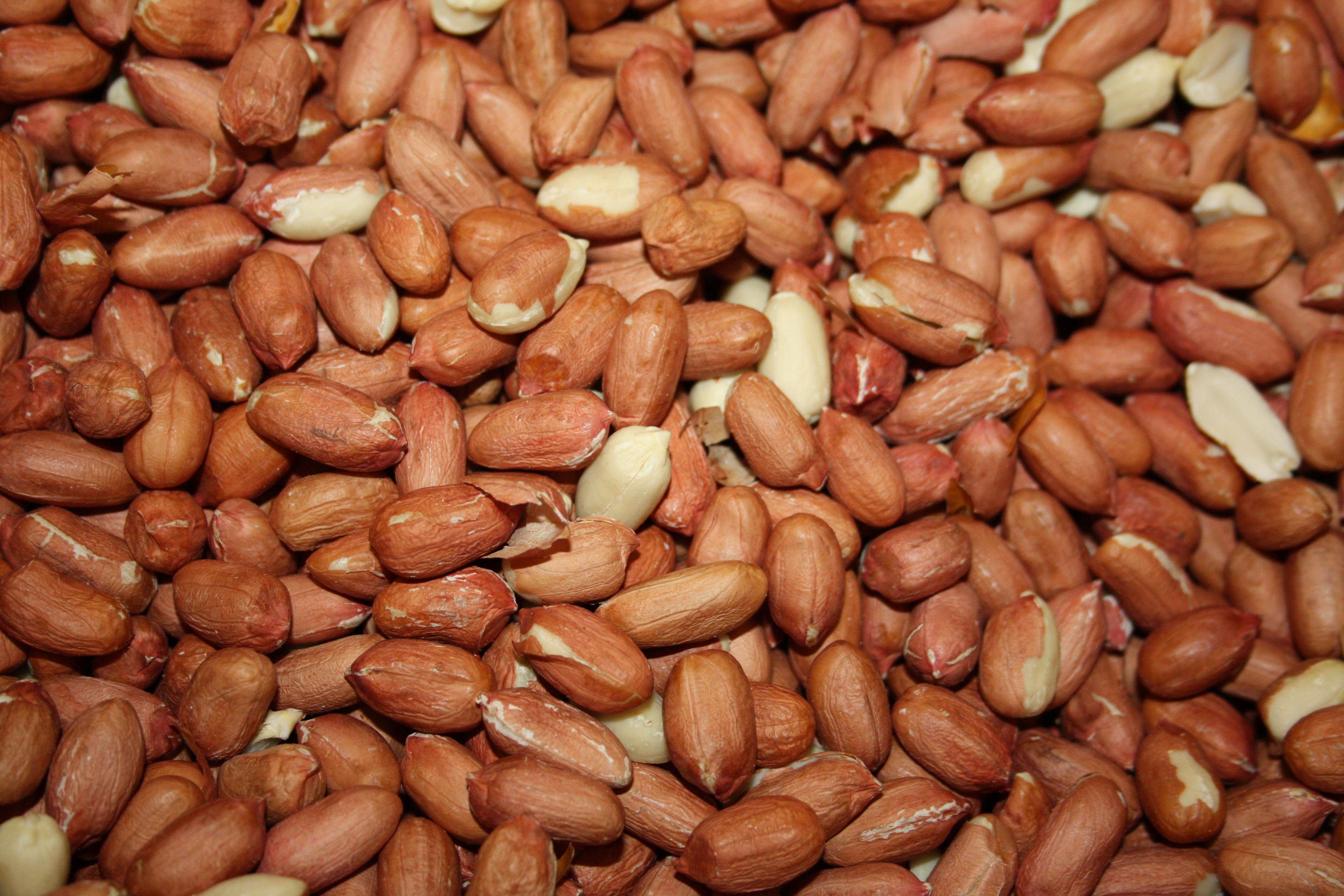 Natural Raw Peanuts (Soudani)   Cananut