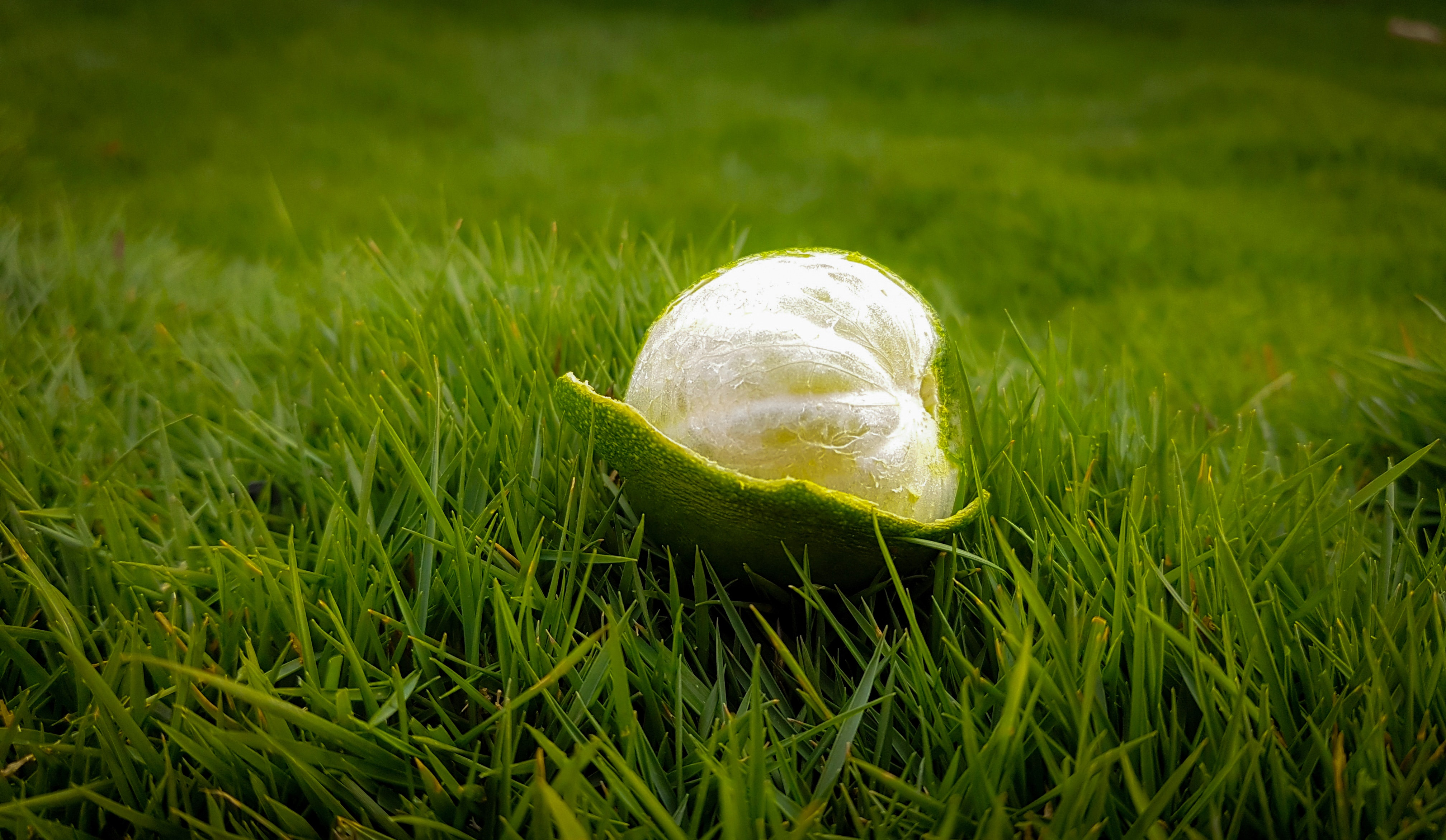 Peeled green lime on green grasses photo