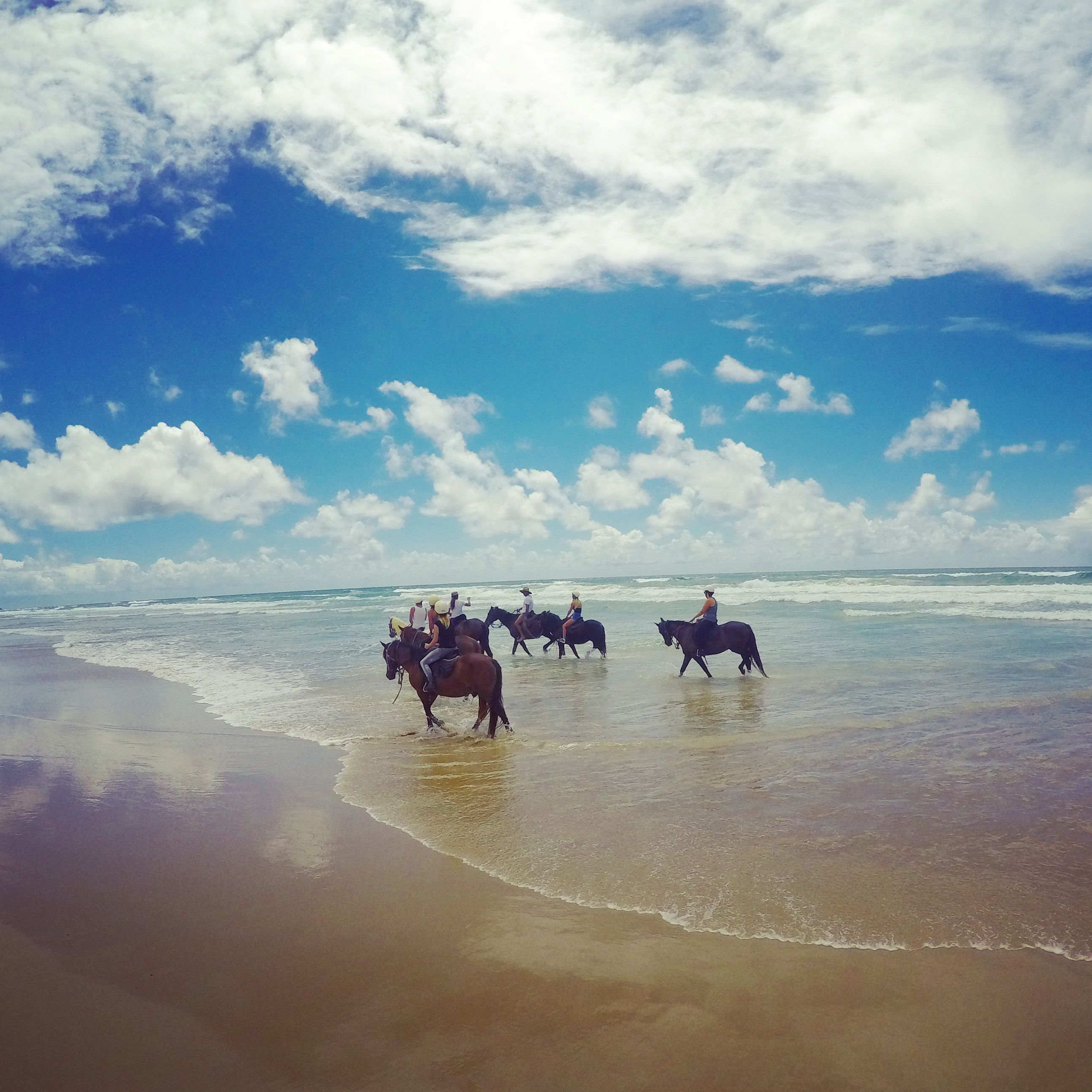 Horse Riding in Byron Bay with Pegasus Park | Horse riding, Byron ...