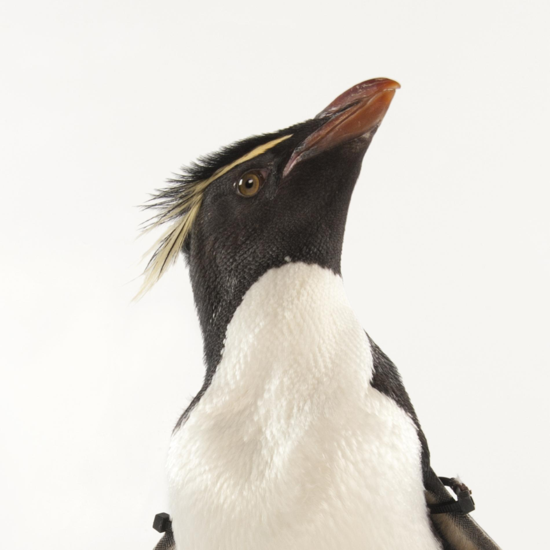Penguin photo