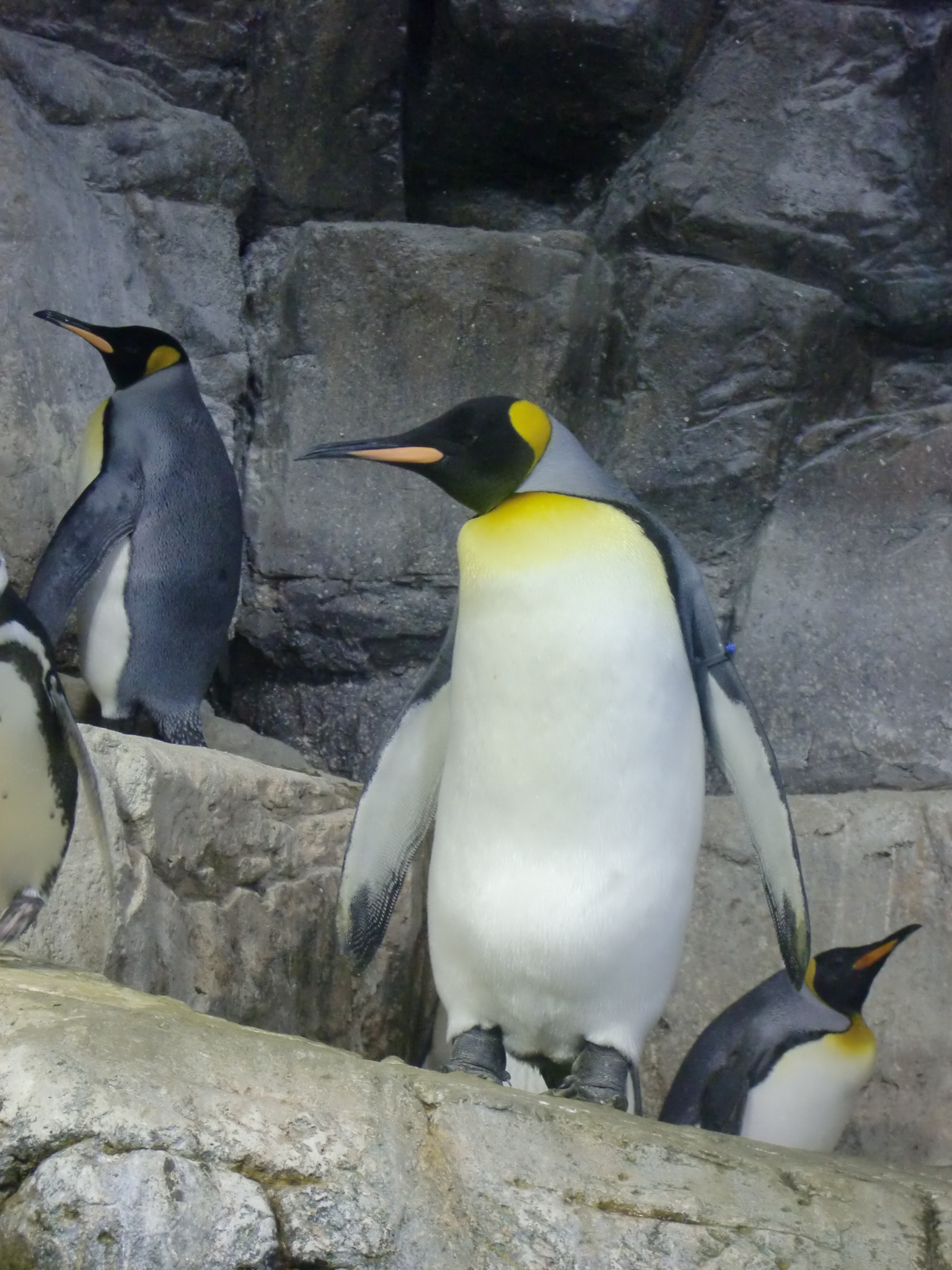 Penguin, Cold, Snow, Zoo, HQ Photo