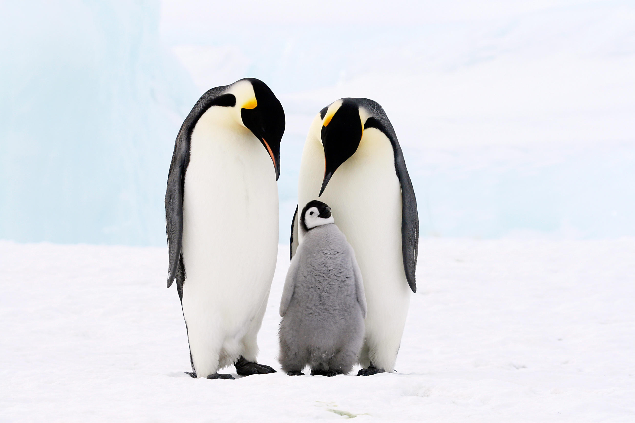 Penguin | Animal Planet