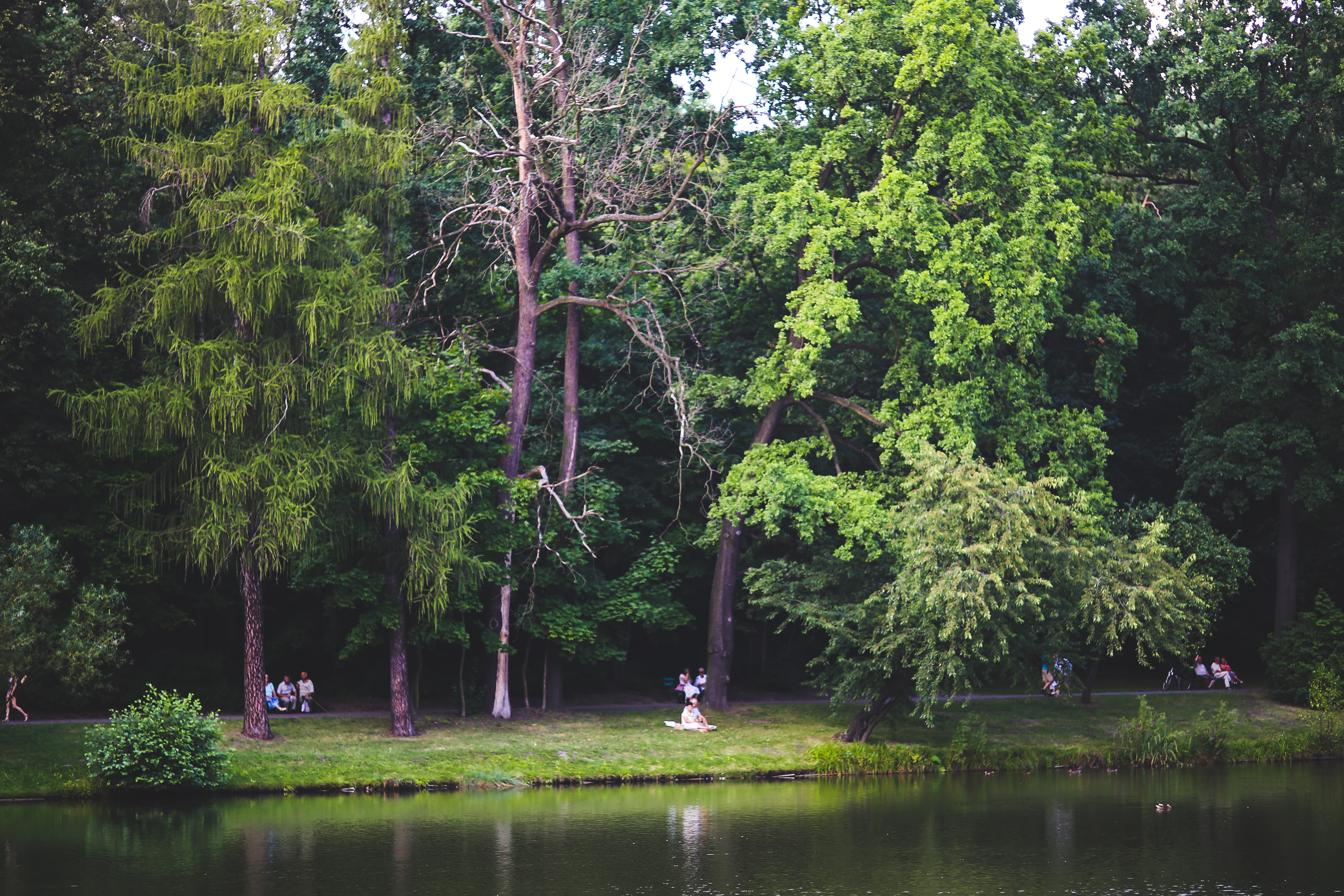 People in the park, Edge, Fairy-tale, Forest, Grass, HQ Photo