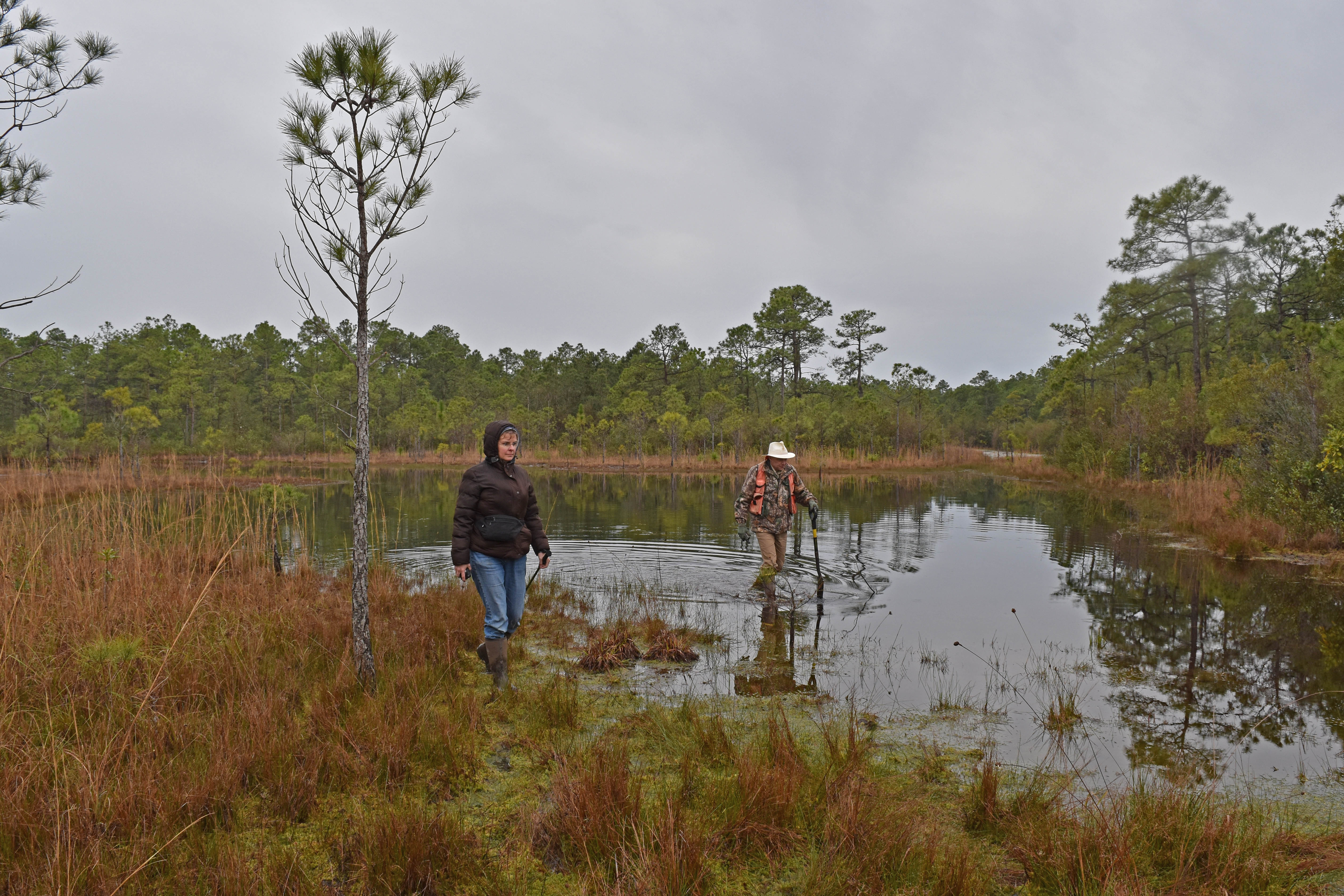 People scientists Boiling Spring Lakes NP ncwetlands AM (9), Forest, Grass, Lake, NC Wetlands, HQ Photo