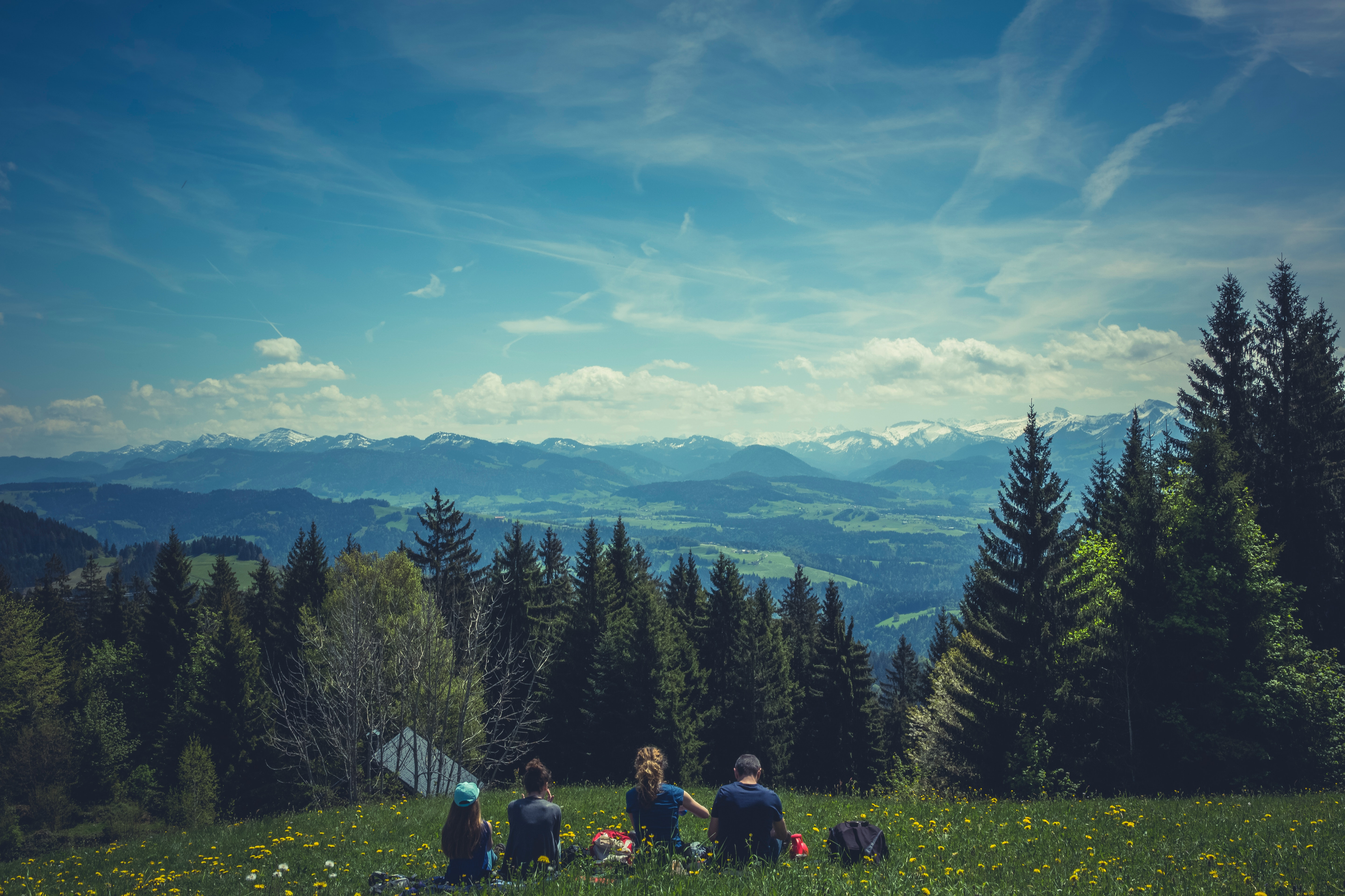 People Sitting on Green Grass, Adventure, Outdoors, Vacation, Trees, HQ Photo
