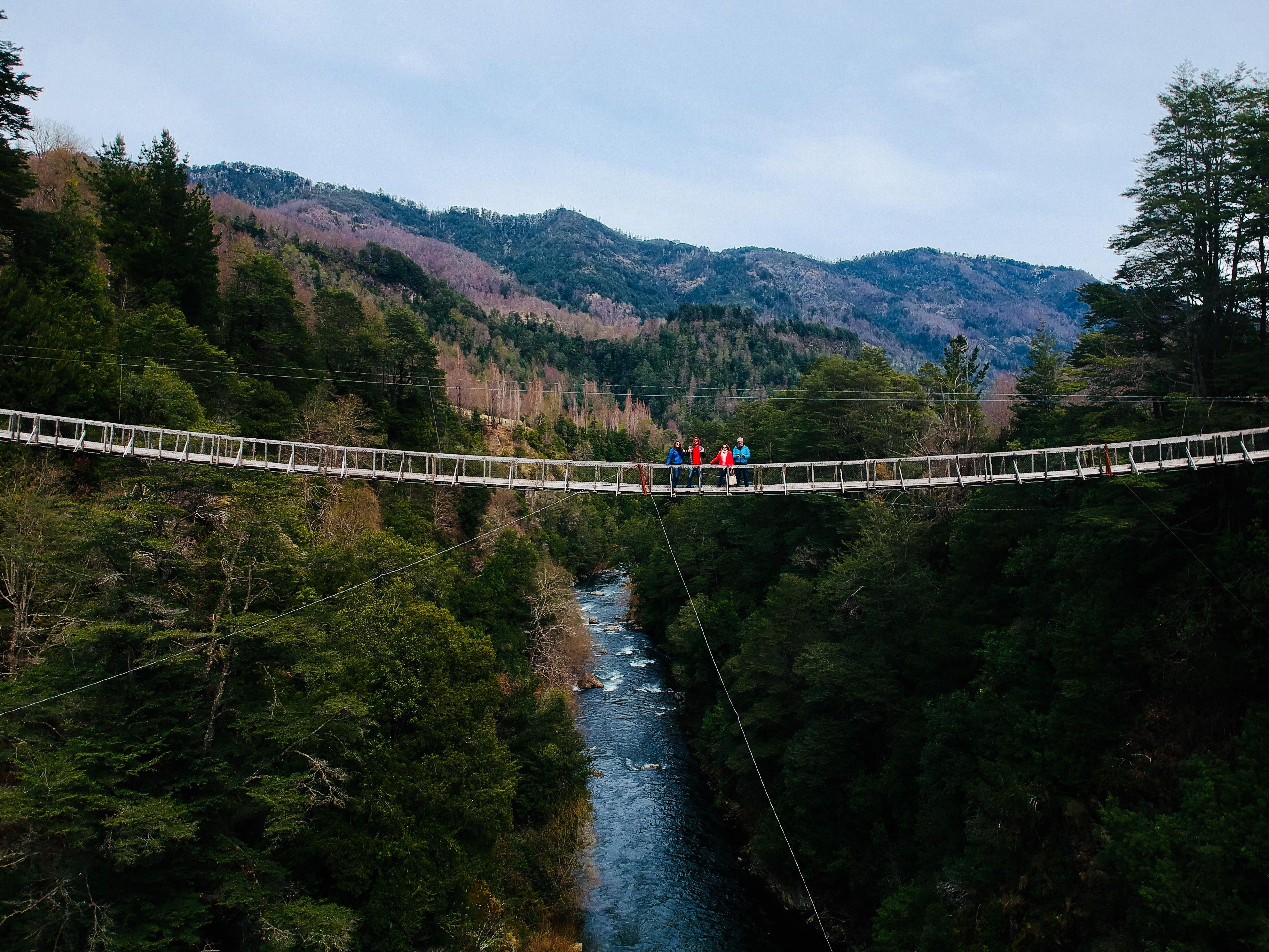 People Standing on Bridge, Bridge, Recreation, Water, Trees, HQ Photo