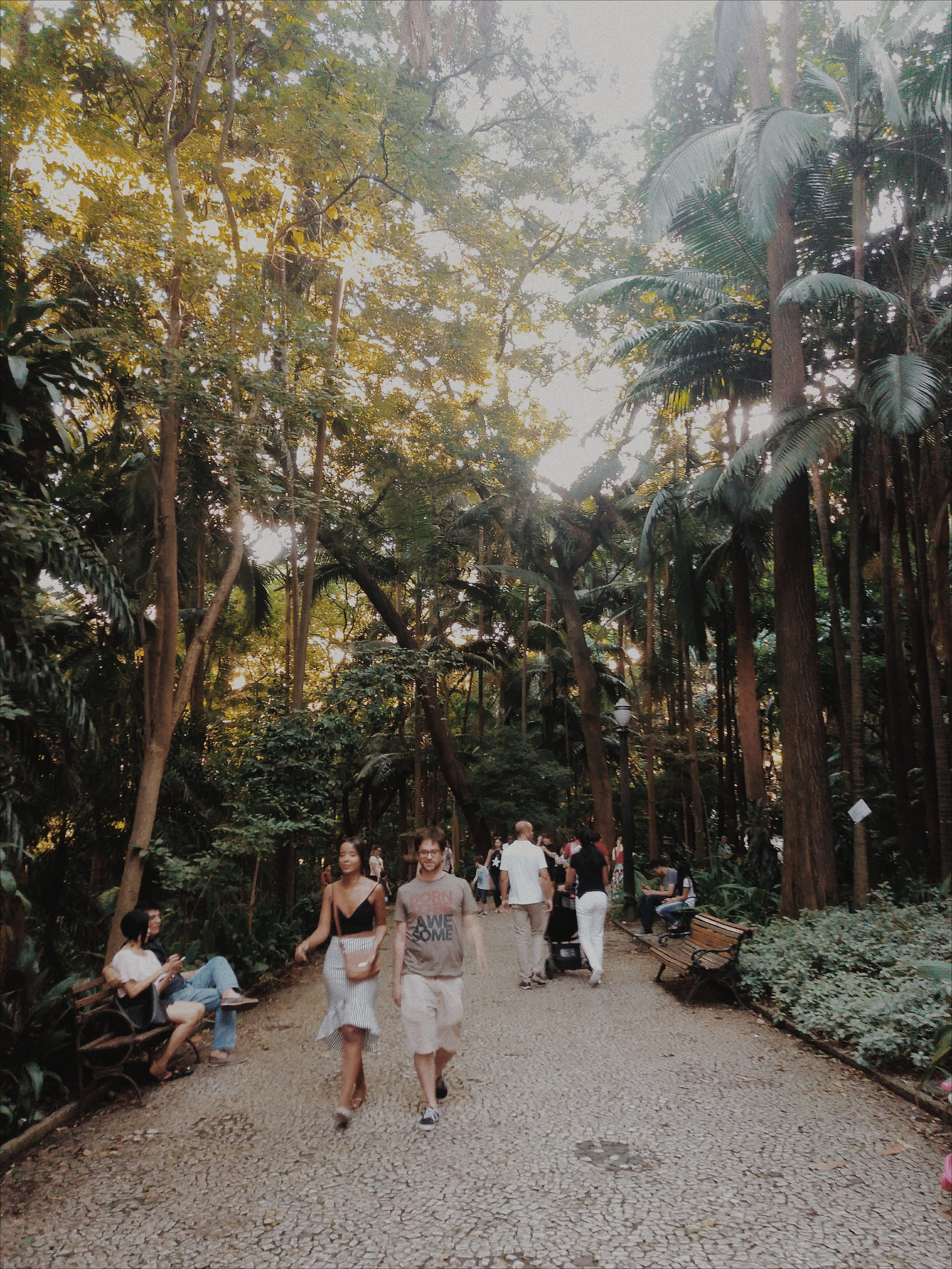 People walking in a park with large trees photo