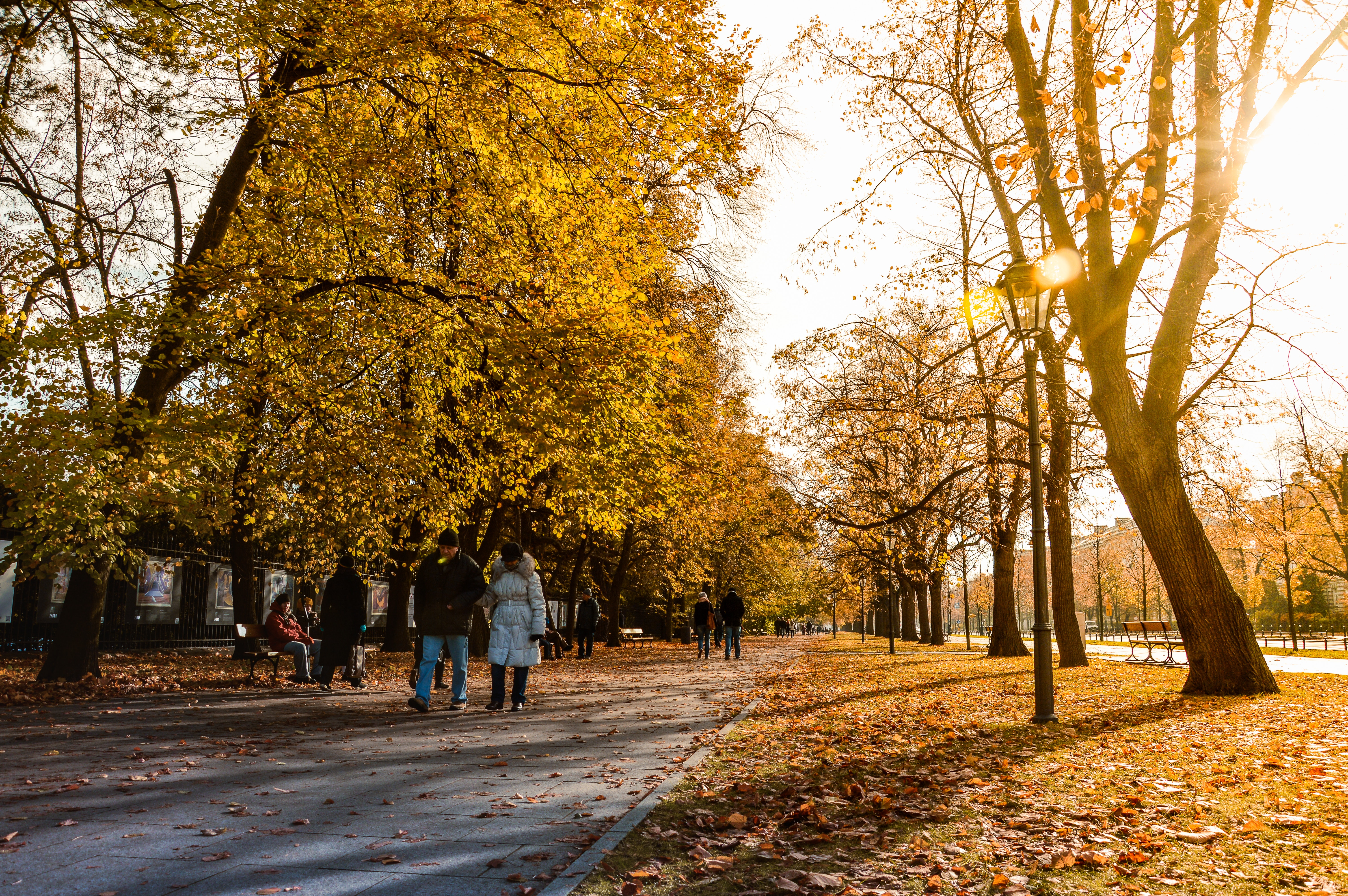 People Walking on Gray Concrete Pathway Between Trees during Daytime, Autumn, Pavement, Way, Warsaw, HQ Photo