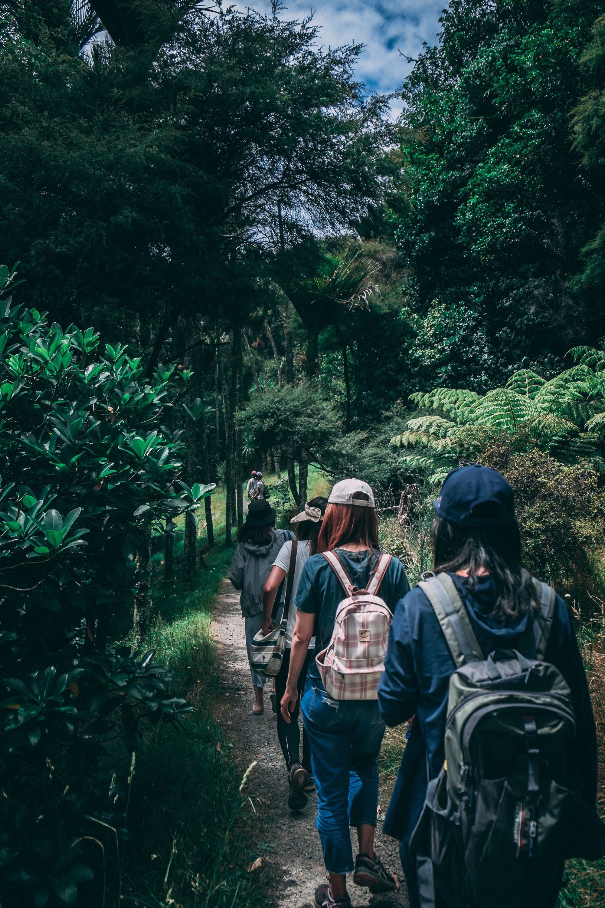 People Wearing Backpacks Walking on Pathway Near Green Leaf Plants, Adult, Trail, People, Rainforest, HQ Photo
