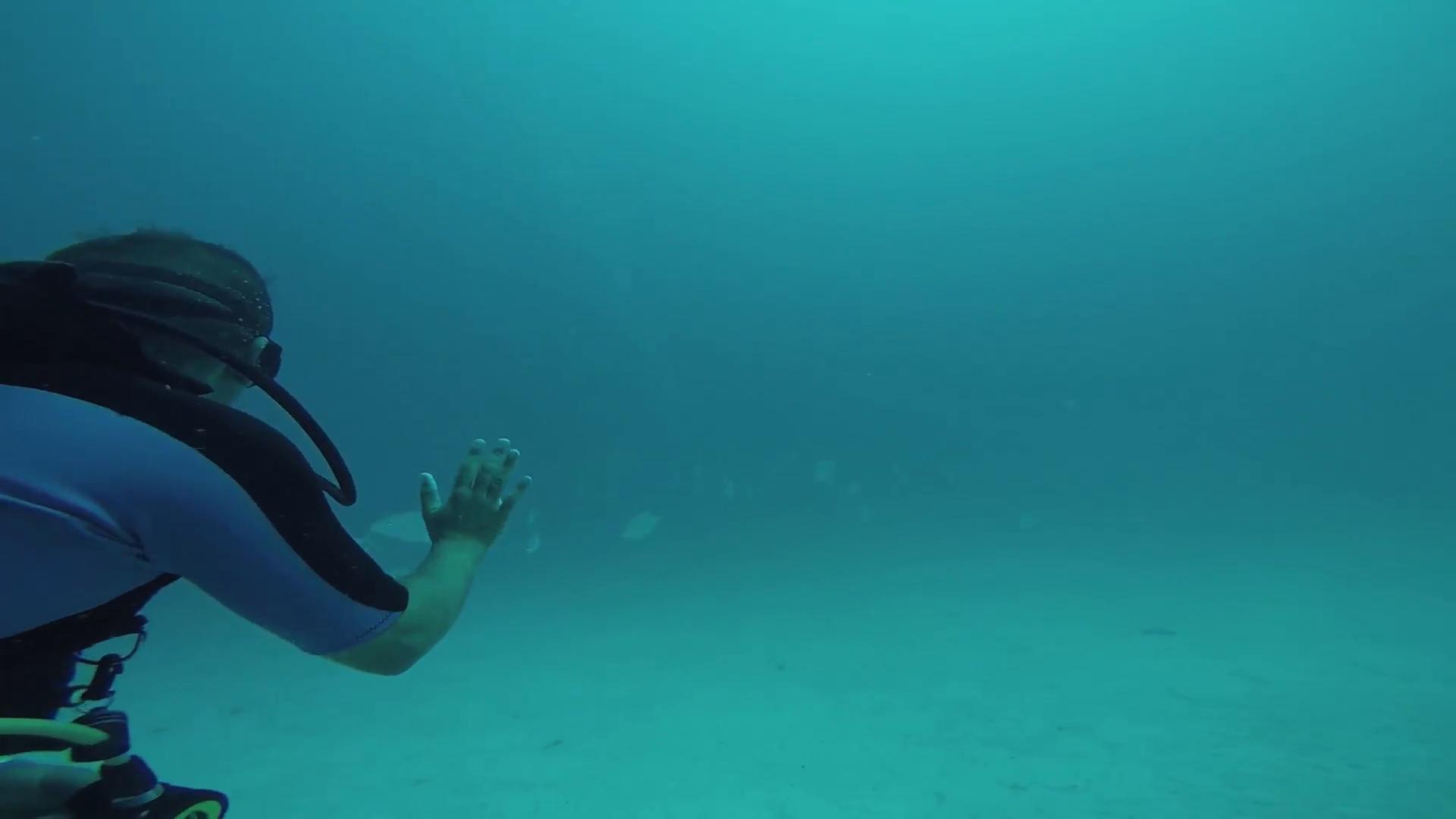 Diver underwater. Beautiful ocean wildlife. Colony of fish. Deepness ...