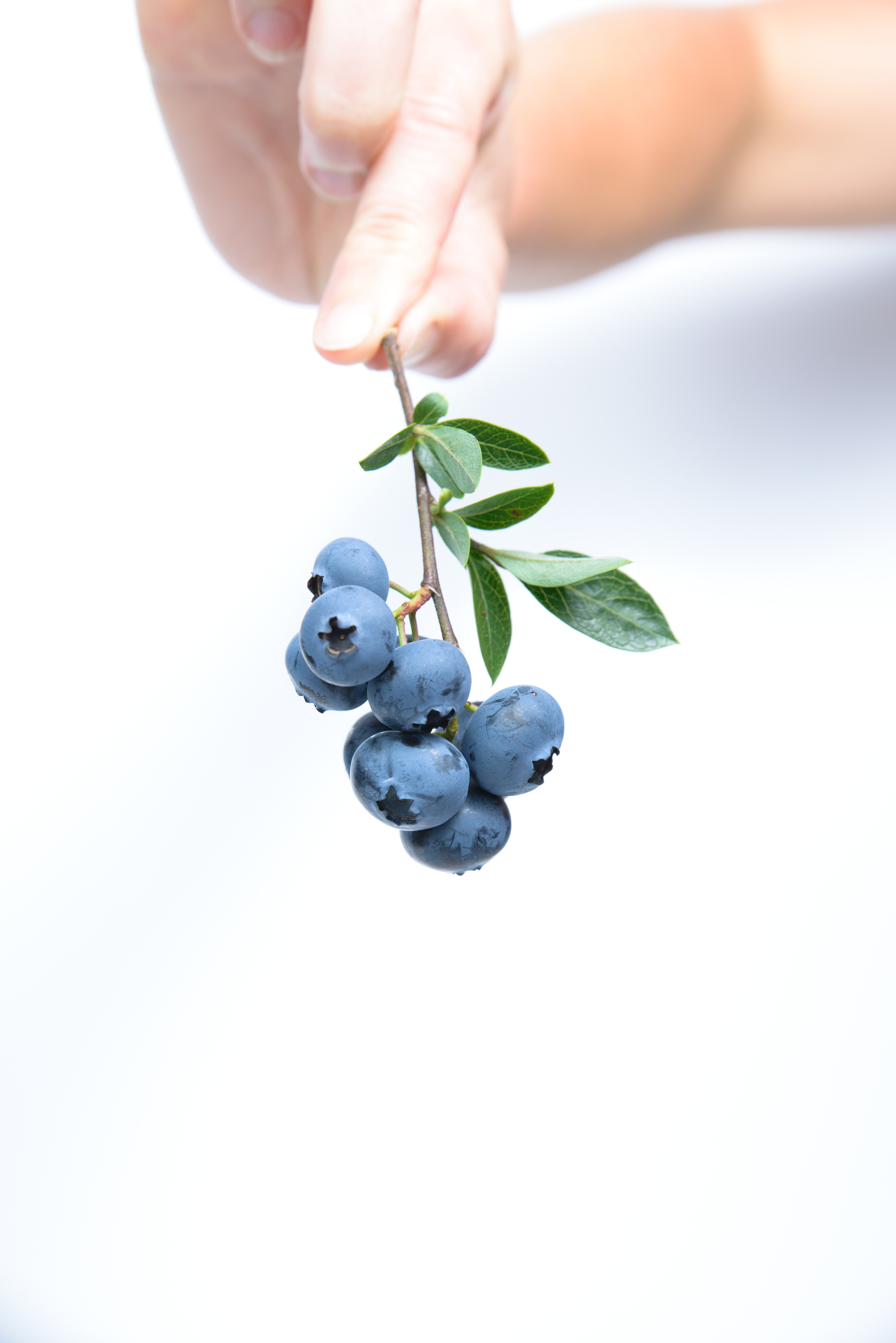 Person Holding Black Currants · Free Stock Photo