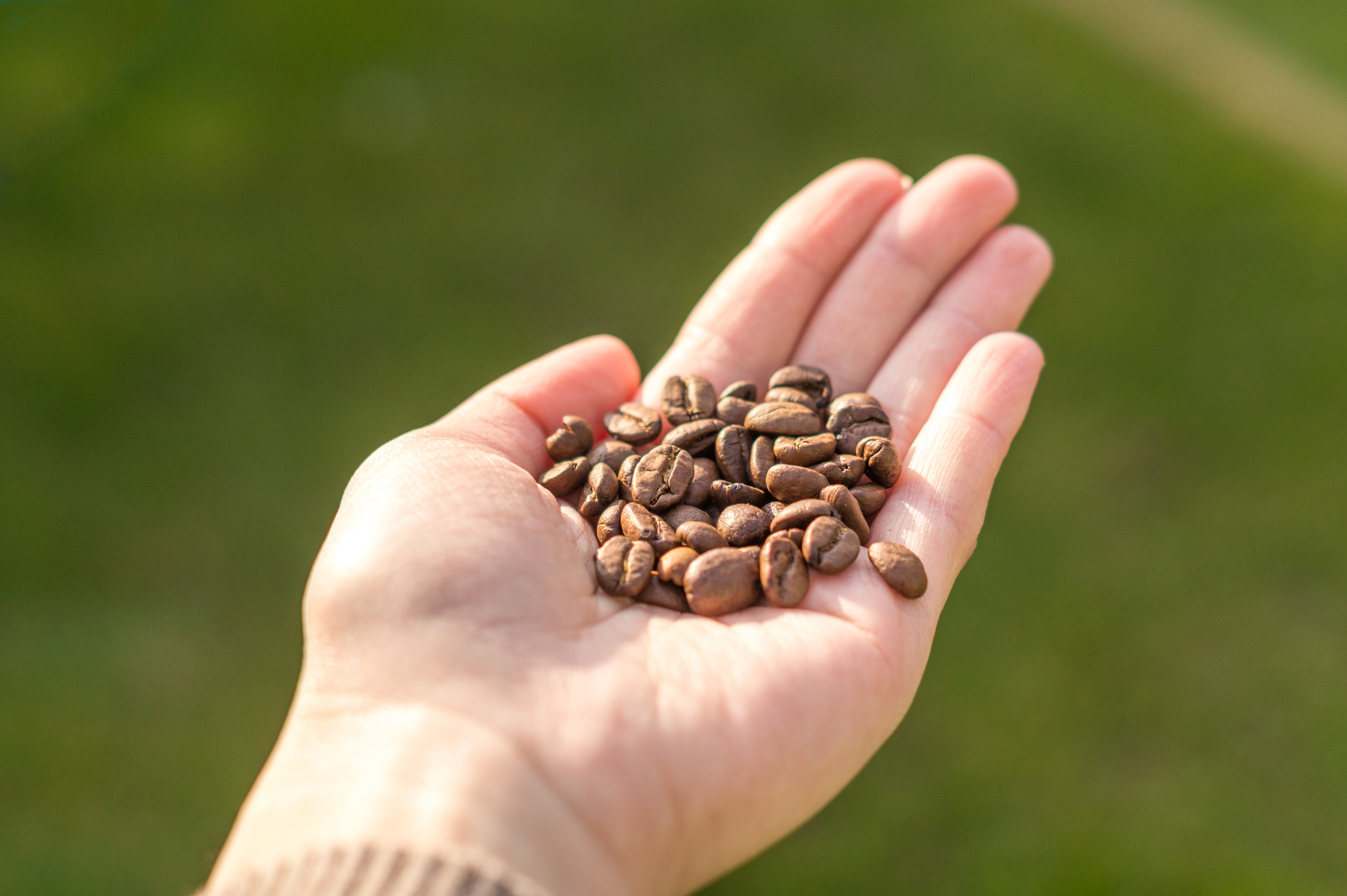Person holding coffee beans photo
