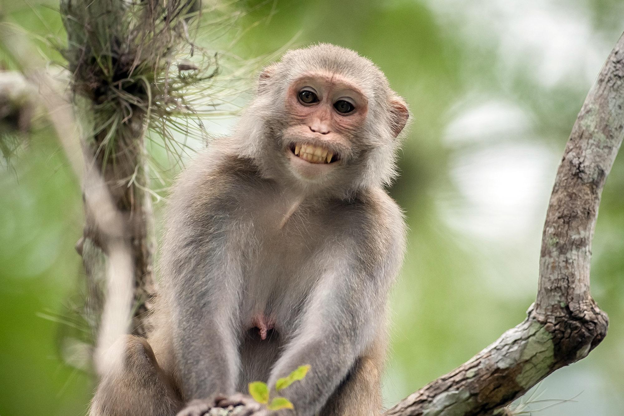 Interpretation of a dream in which you saw «Monkey»