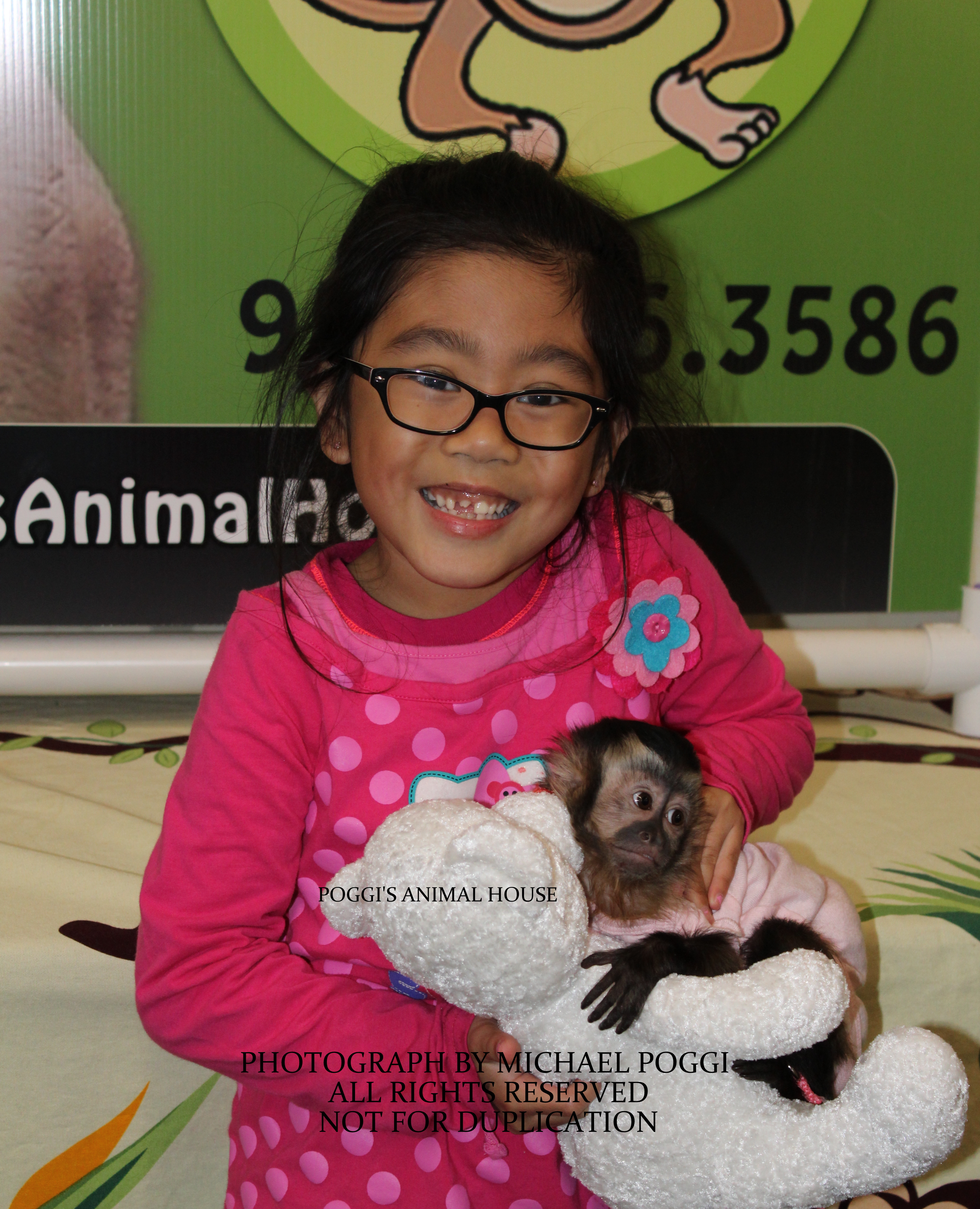 Smiling little girl holding a cute baby Capuchin Monkey - Capuchin ...