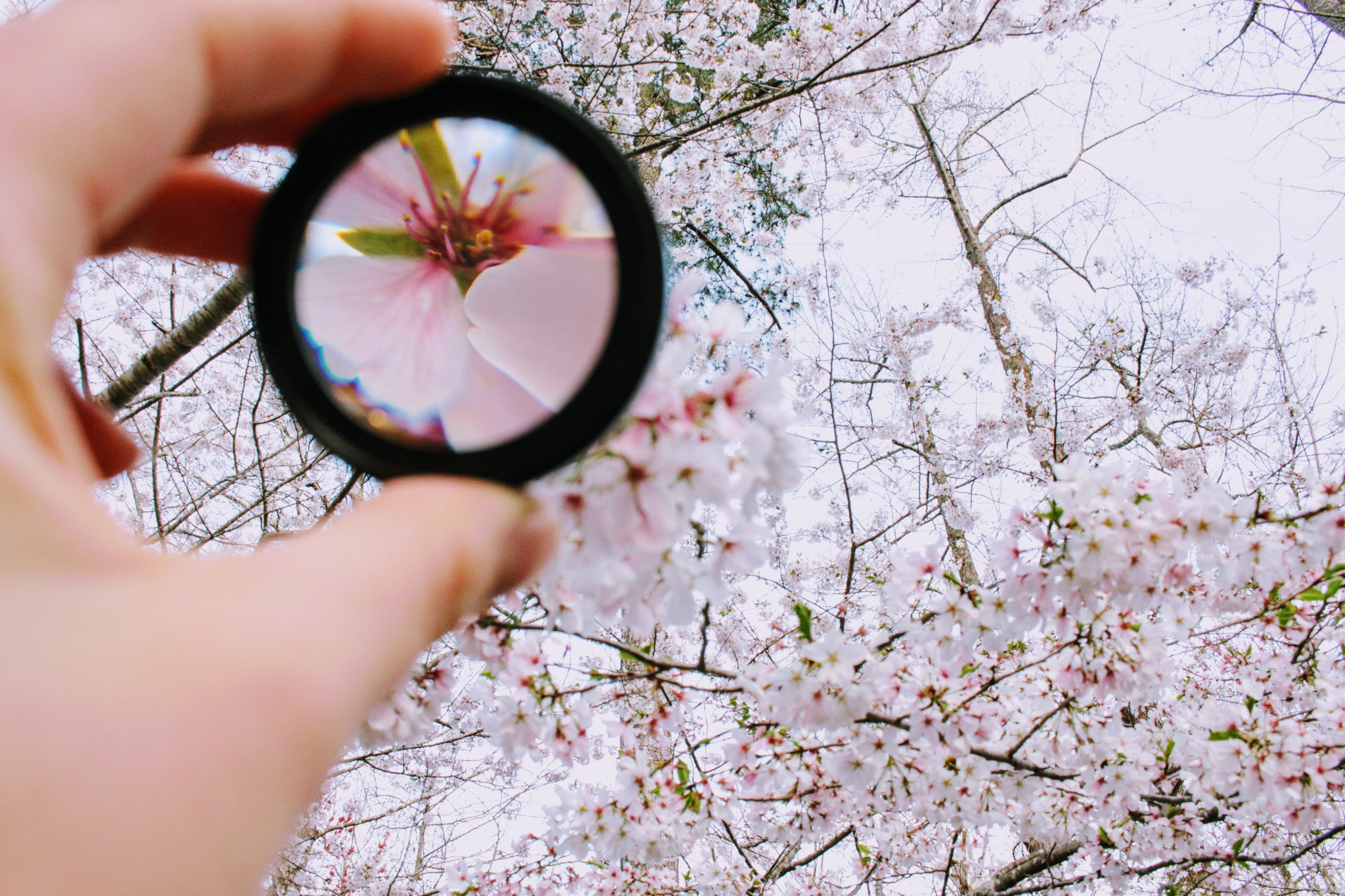 Person Holding Round Framed Mirror Near Tree at Daytime, Garden, Tree, Petals, Person, HQ Photo