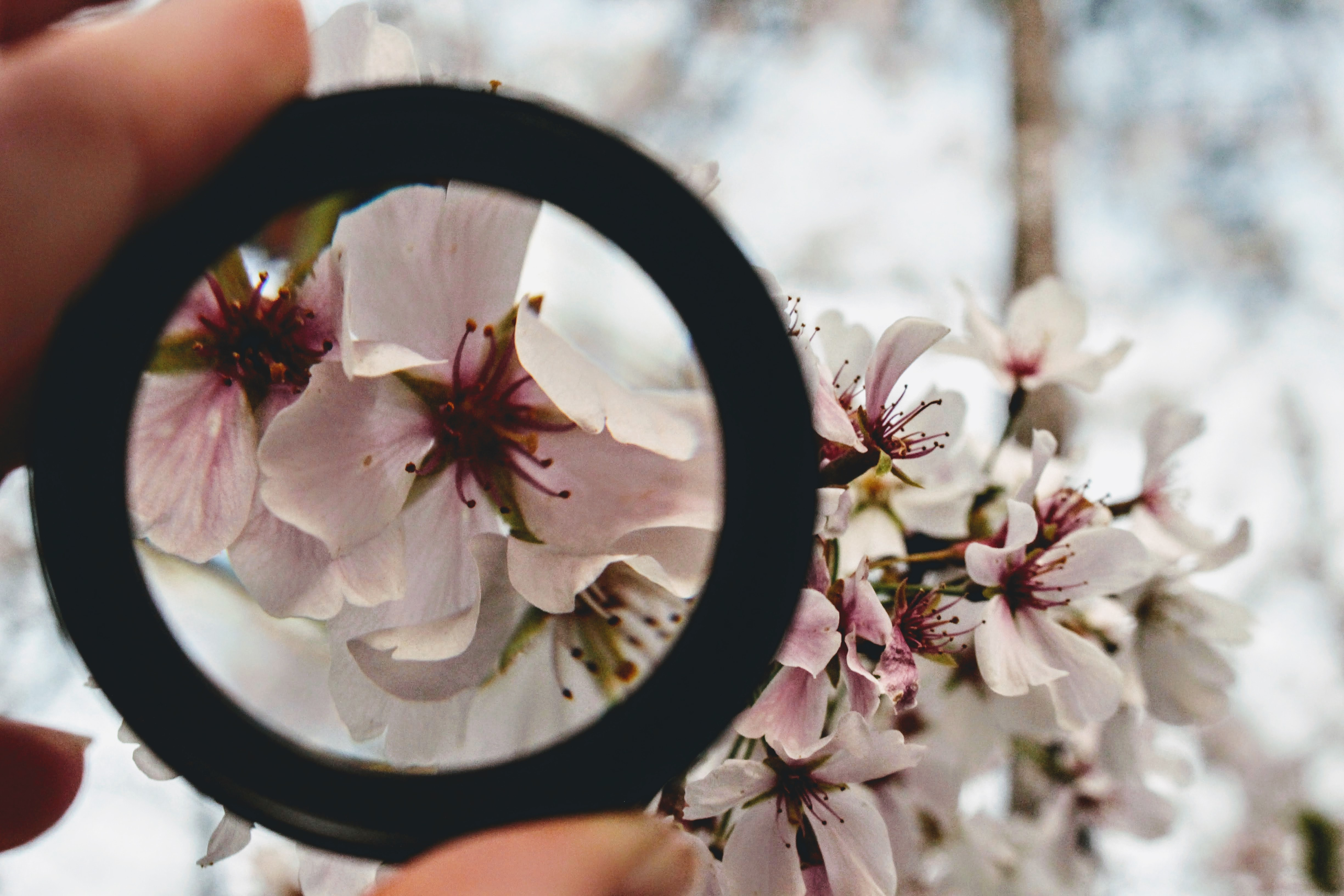Person Holding Round Framed Mirror Near Tree at Daytime · Free Stock ...