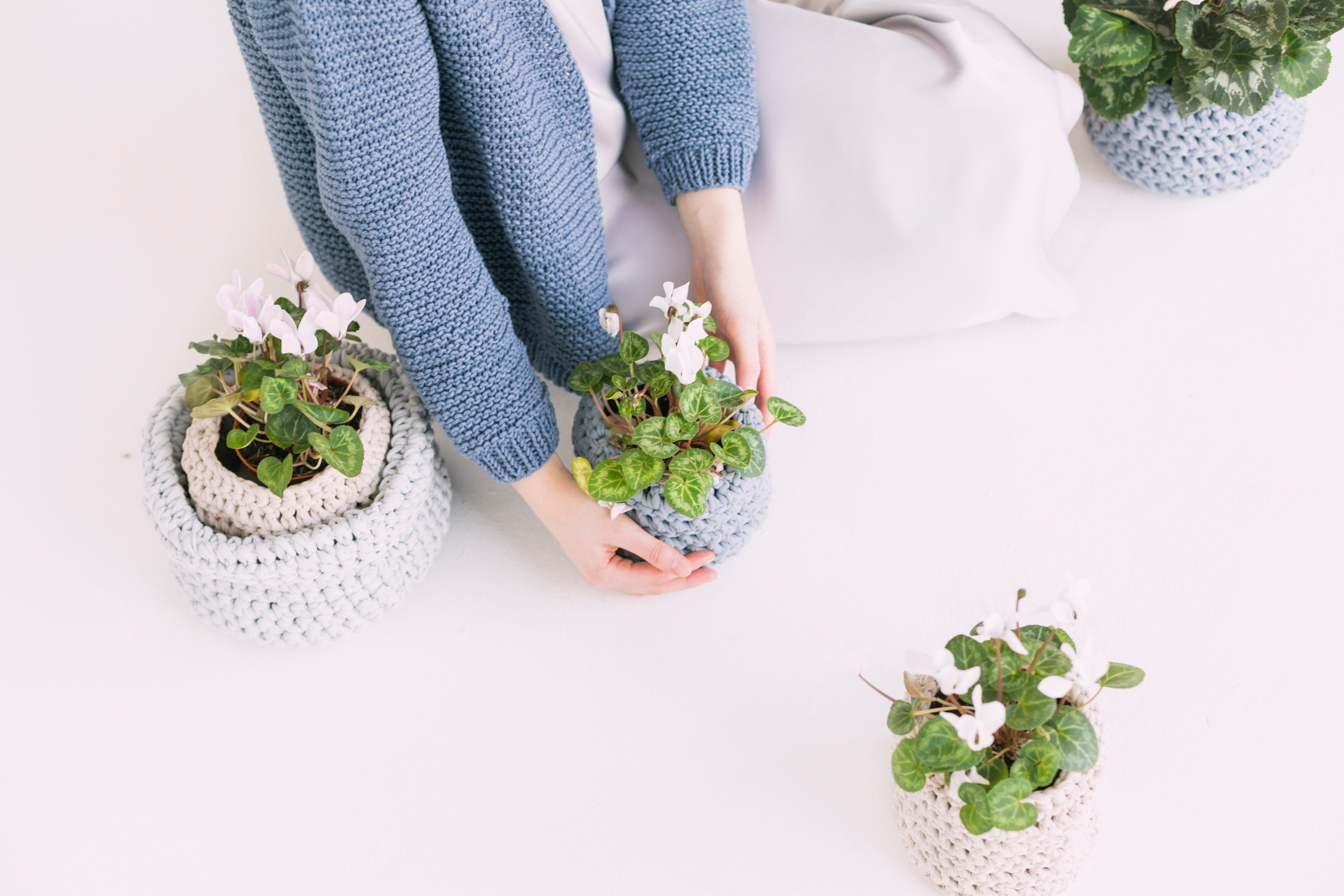 Person in blue sweater holding green potted plant photo